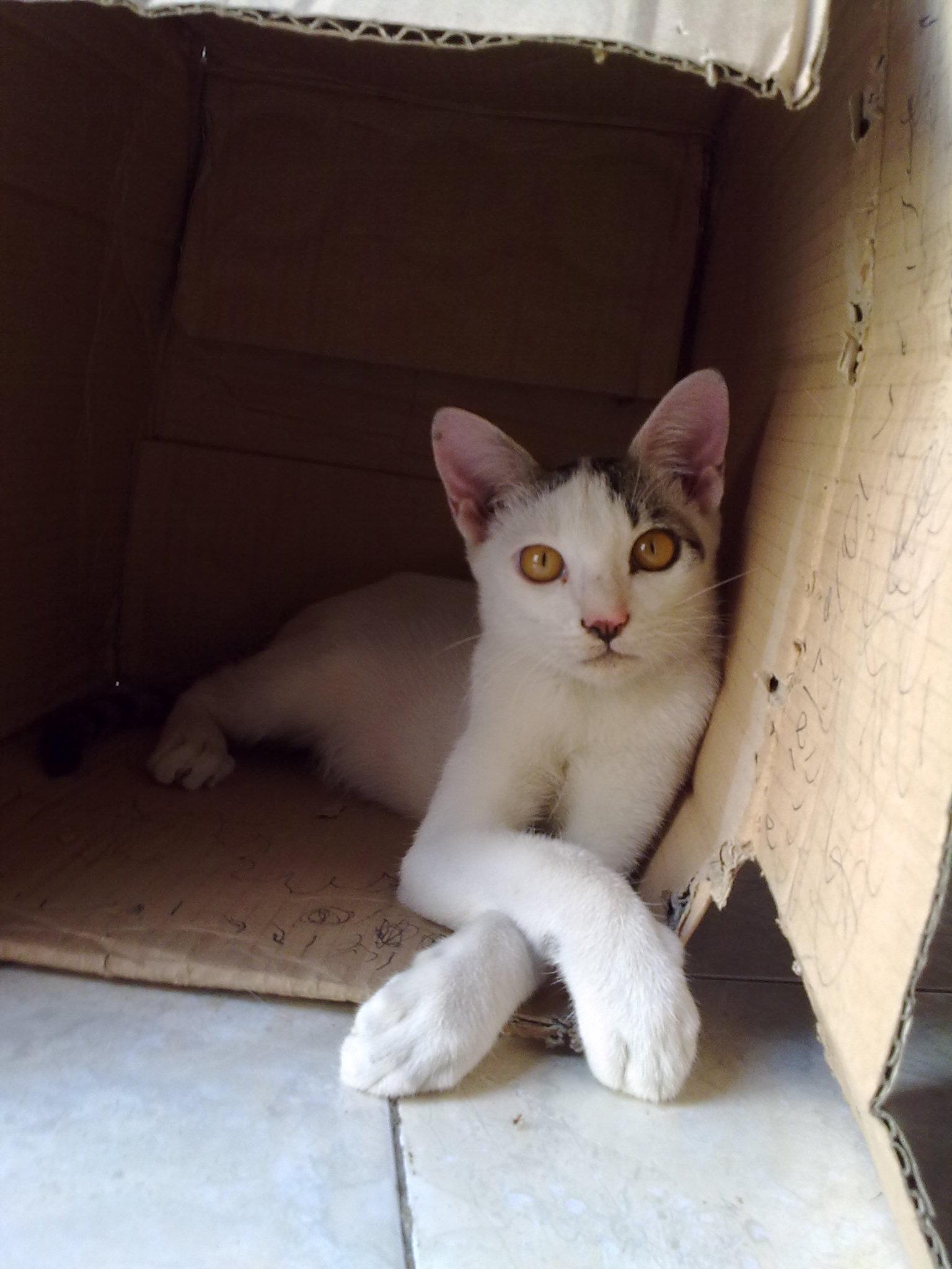 Cat in the box photo