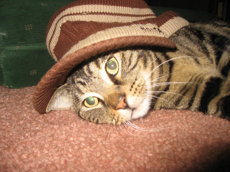 Cat in the hat!, Animal, Cat, Cute, Dressup, HQ Photo