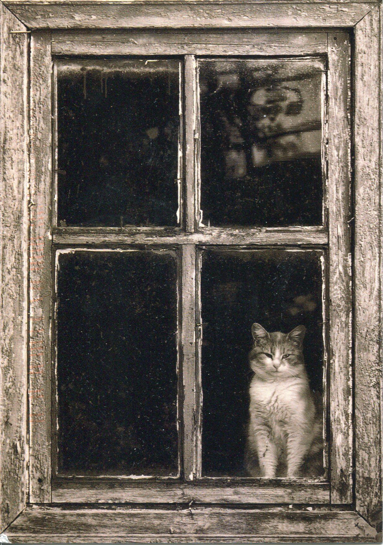 Cat in the window photo