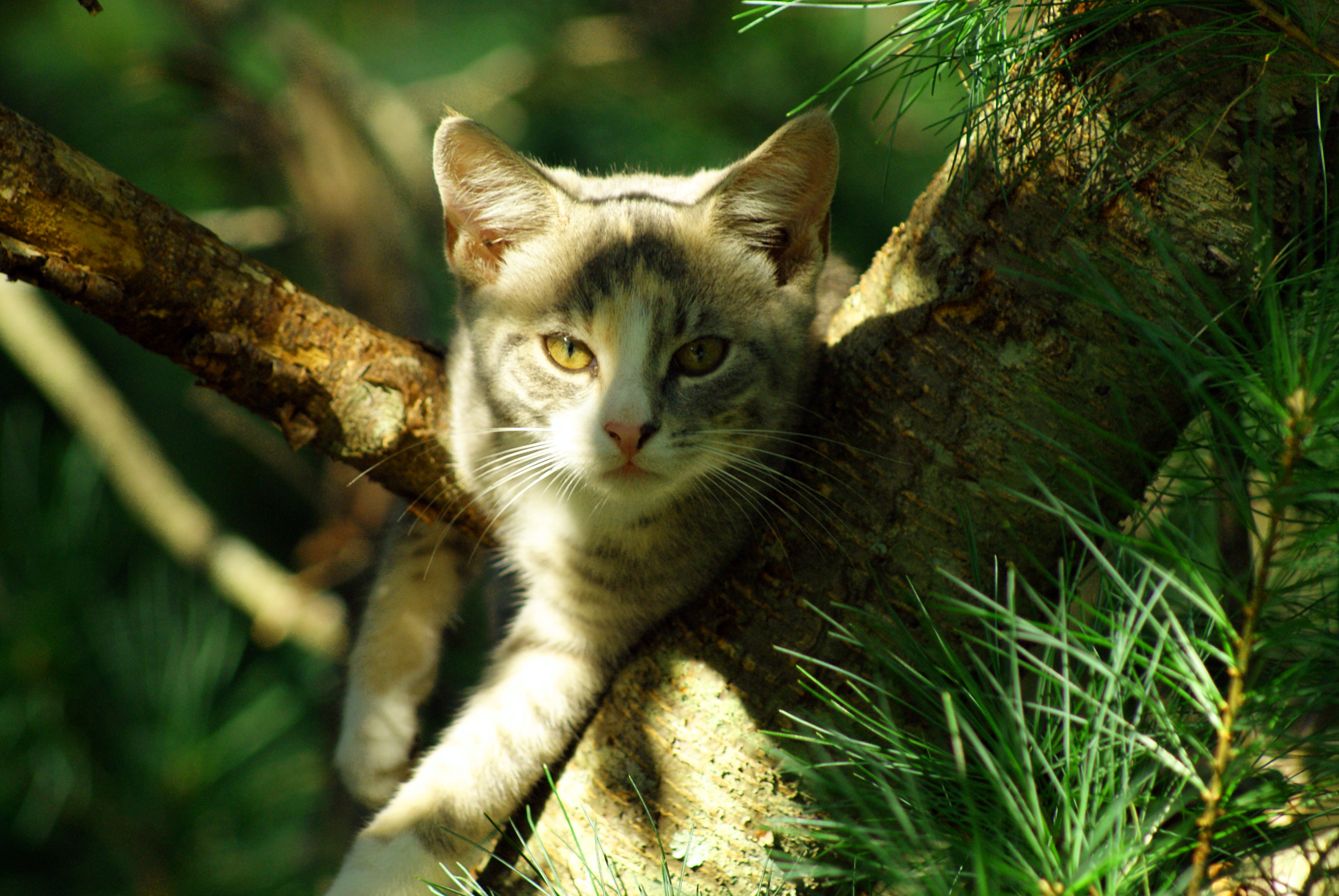 Cat In Tree, Adorable, Rescue, Leaves, Little, HQ Photo