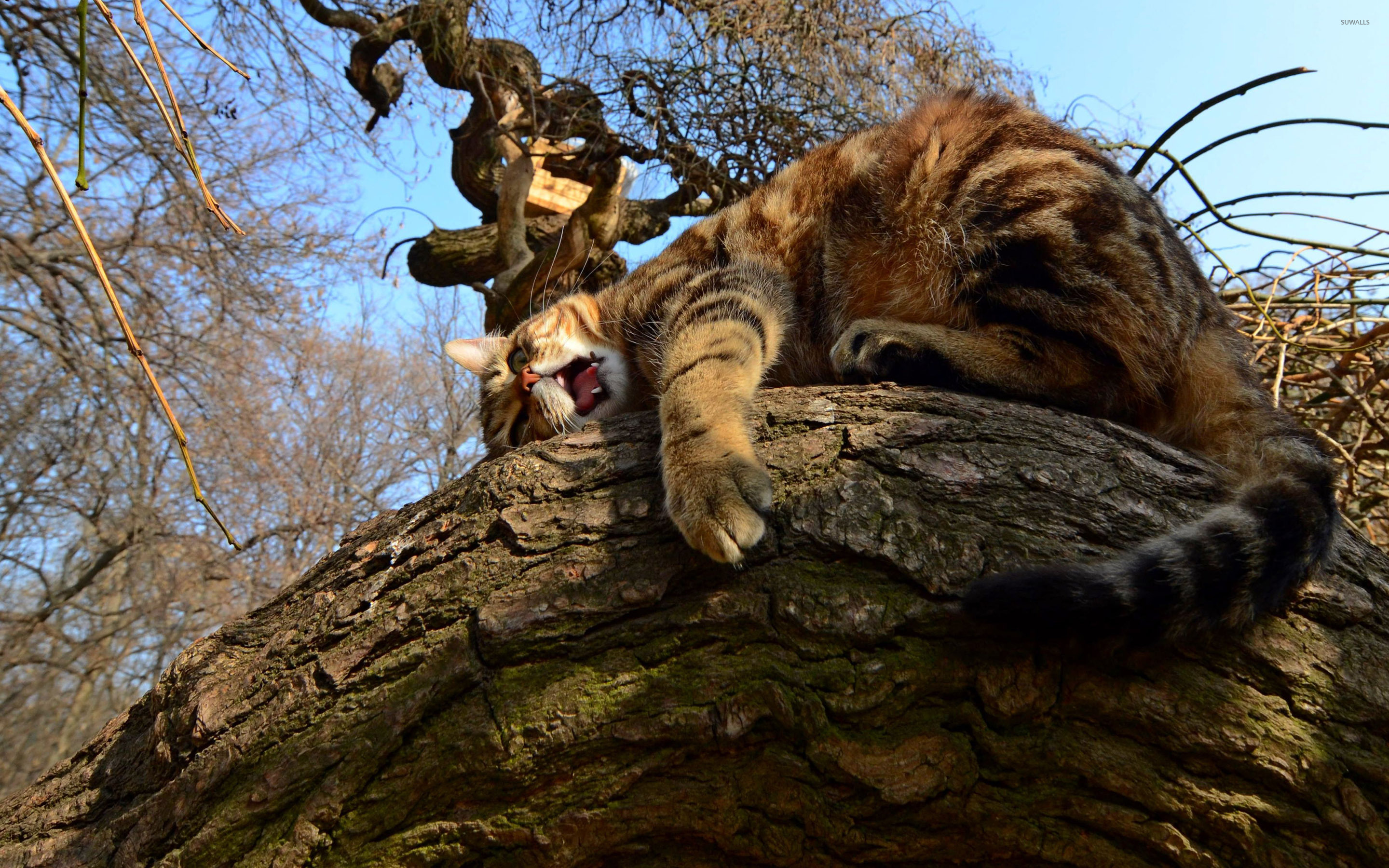 Cat in a tree wallpaper - Animal wallpapers - #39009