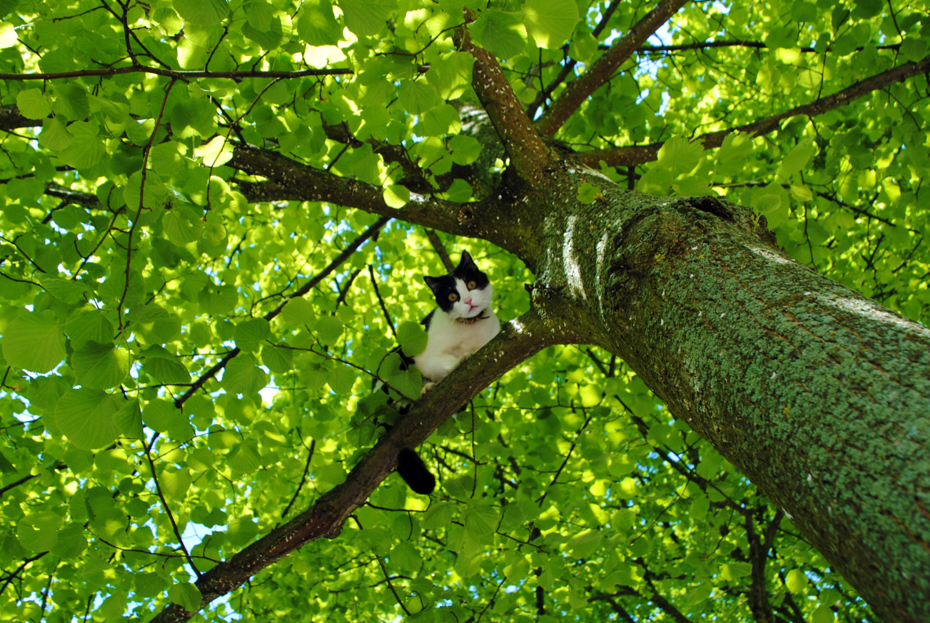 Cat Caught In A Tree | Capturing My World / Paul Abspoel