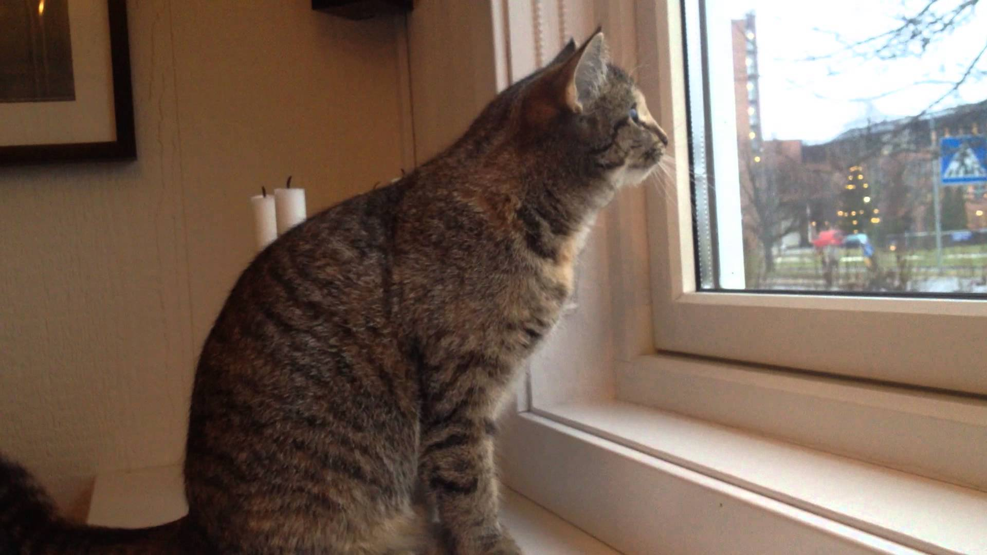 My cat looking at birds trough the window - YouTube