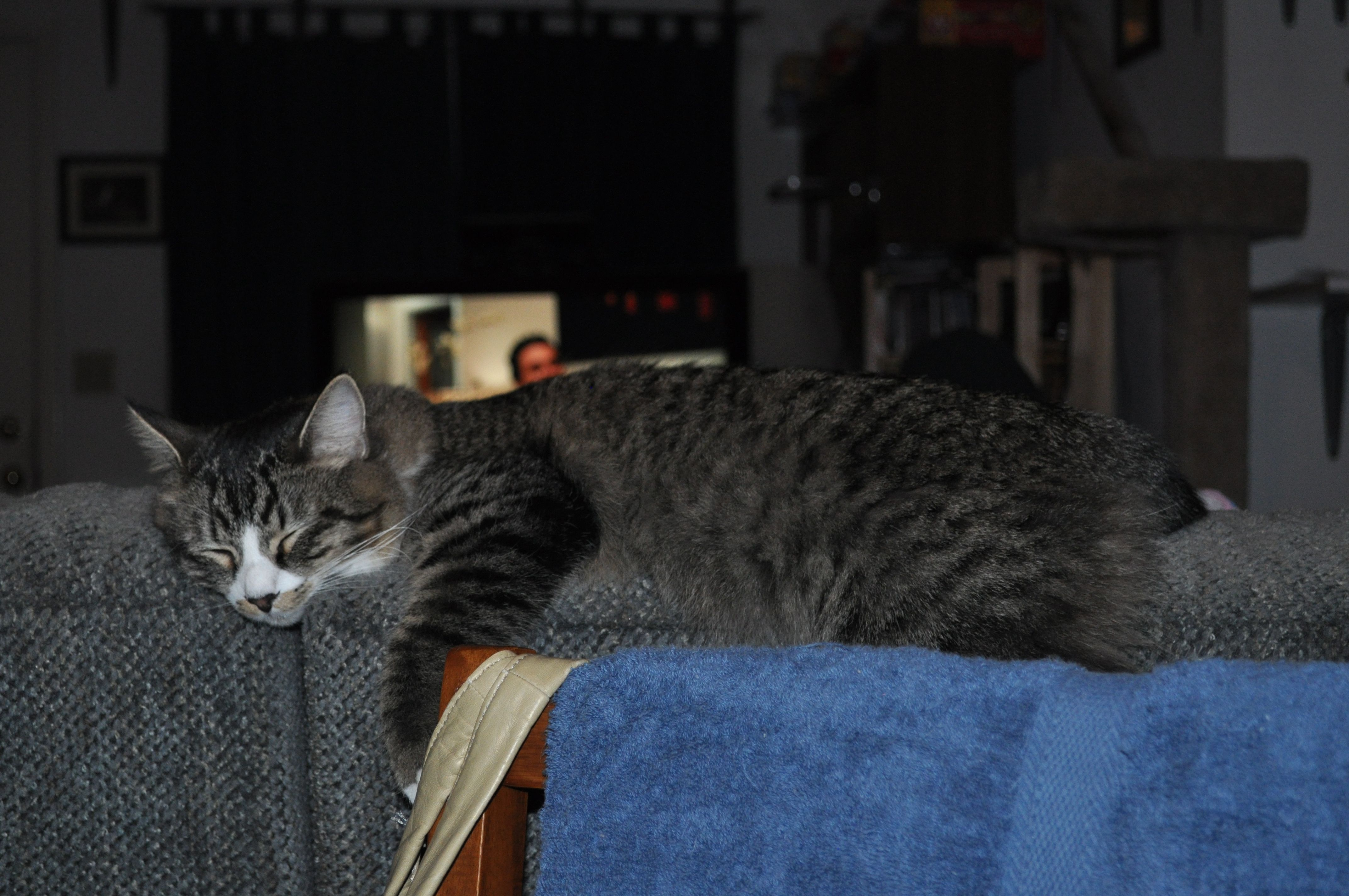 cat nappin   Pippin   Pinterest   Cat