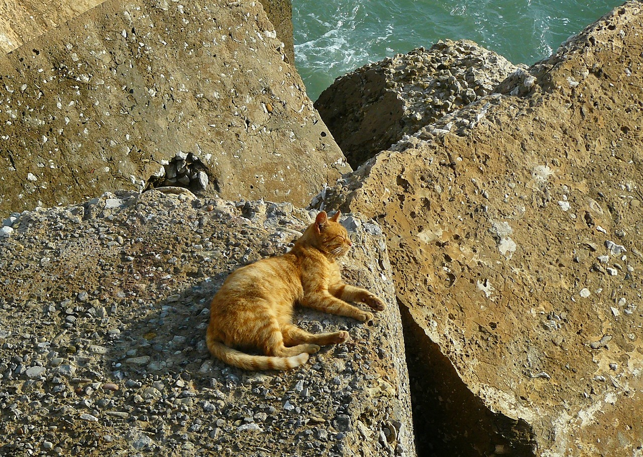 Cat on the rock photo
