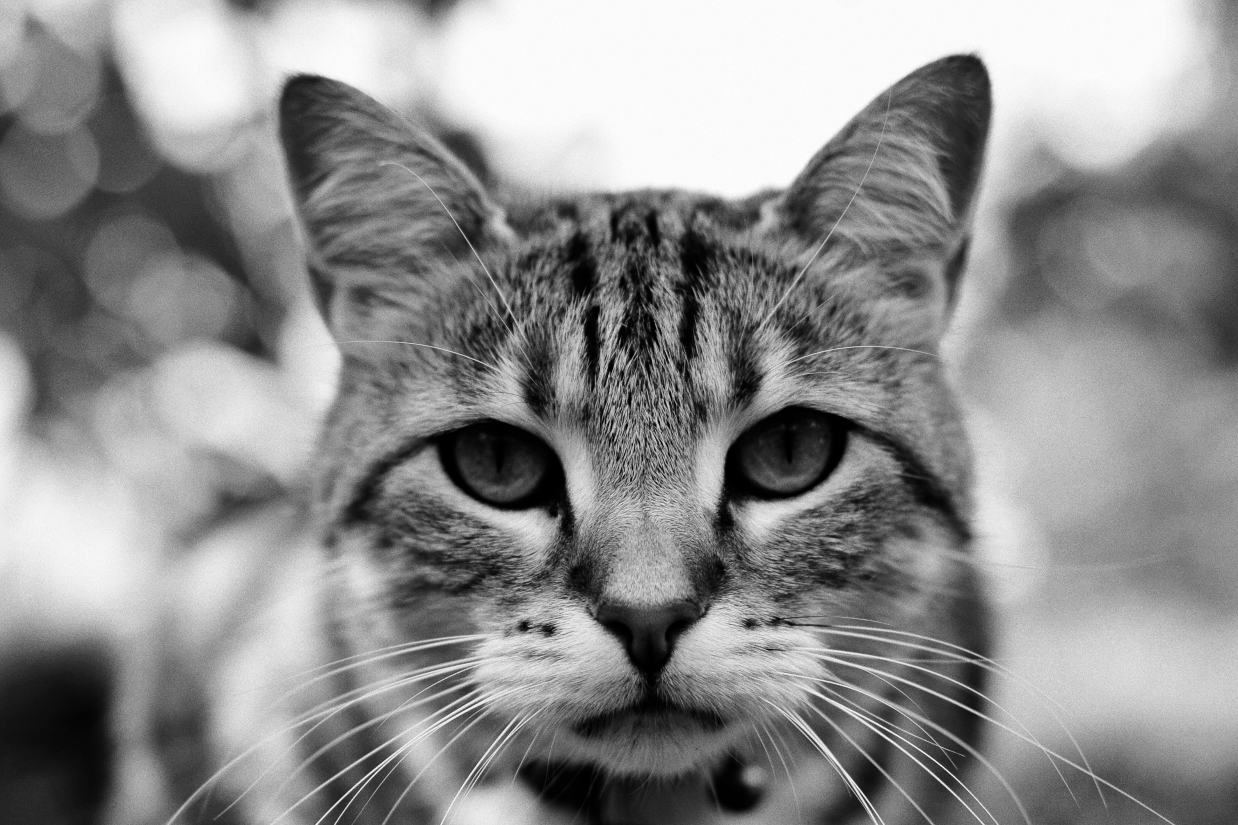 Portrait of my Cat by pohlmannmark on DeviantArt