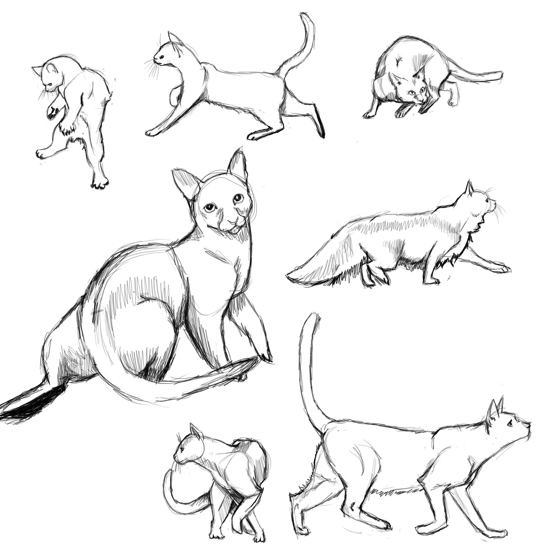 Cat Poses: study1 by FlameFoxe on DeviantArt