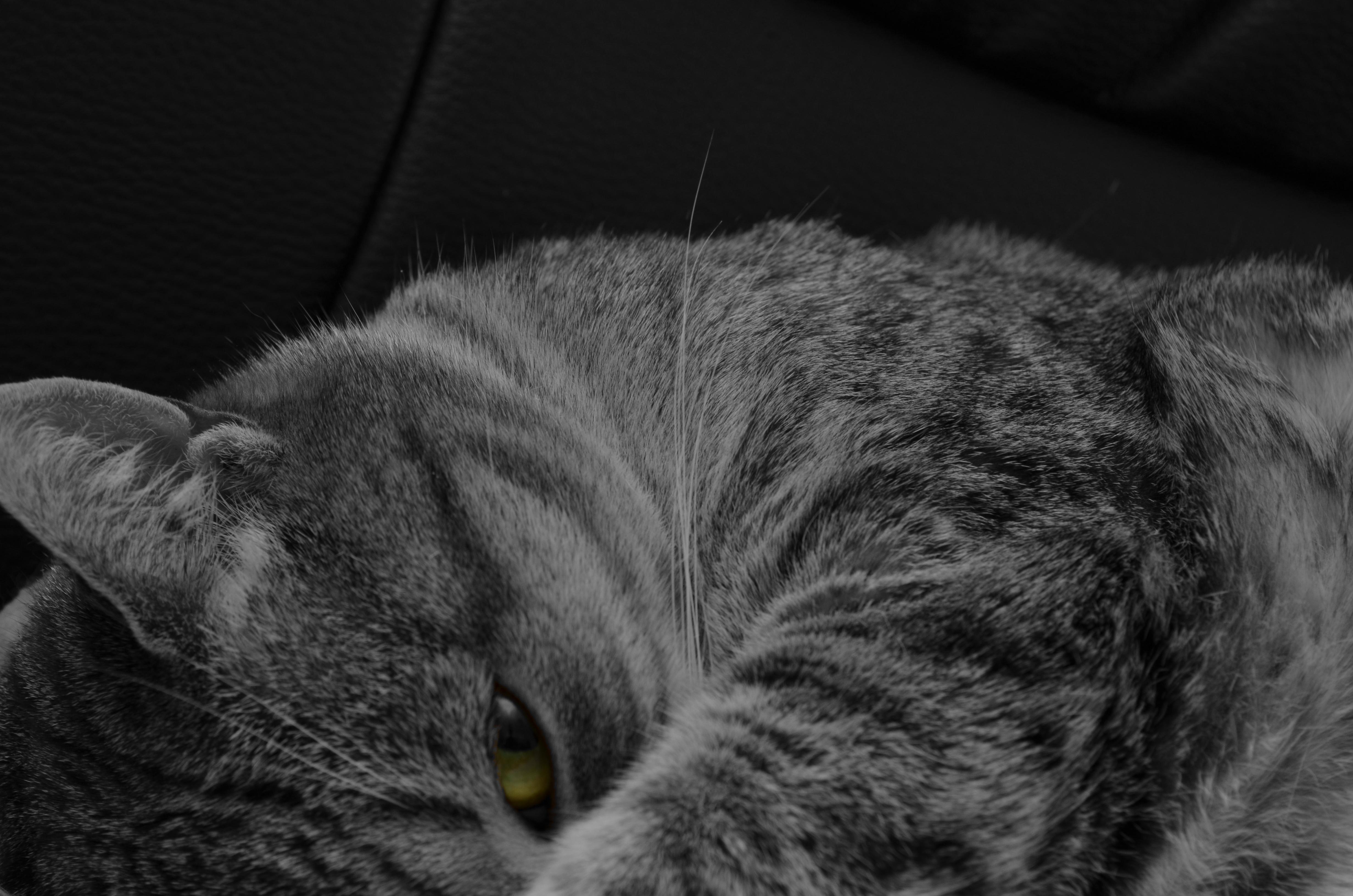 Cat - Shaila, Multicolor, Pet, Watching, Multi, HQ Photo
