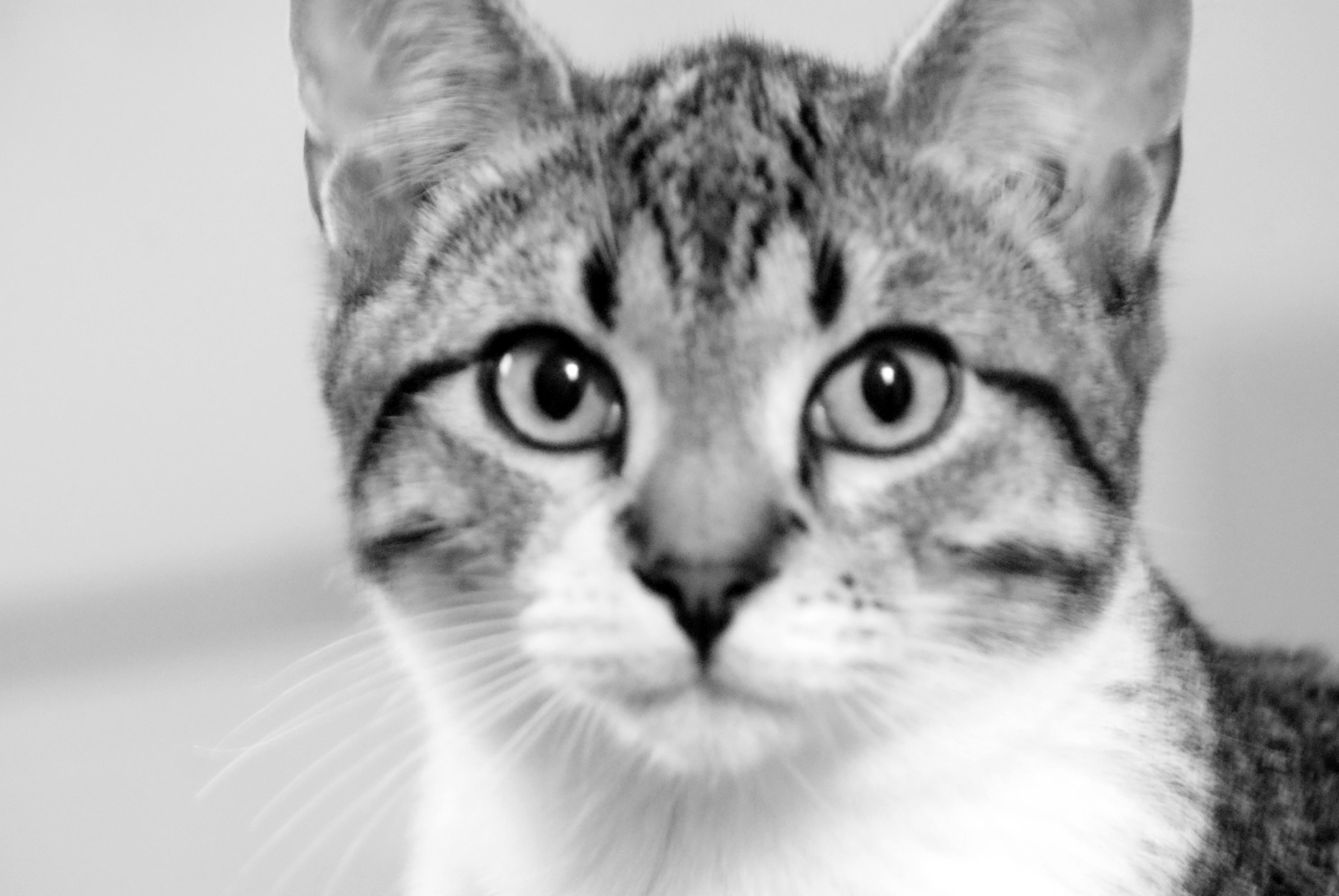 Cat staring photo