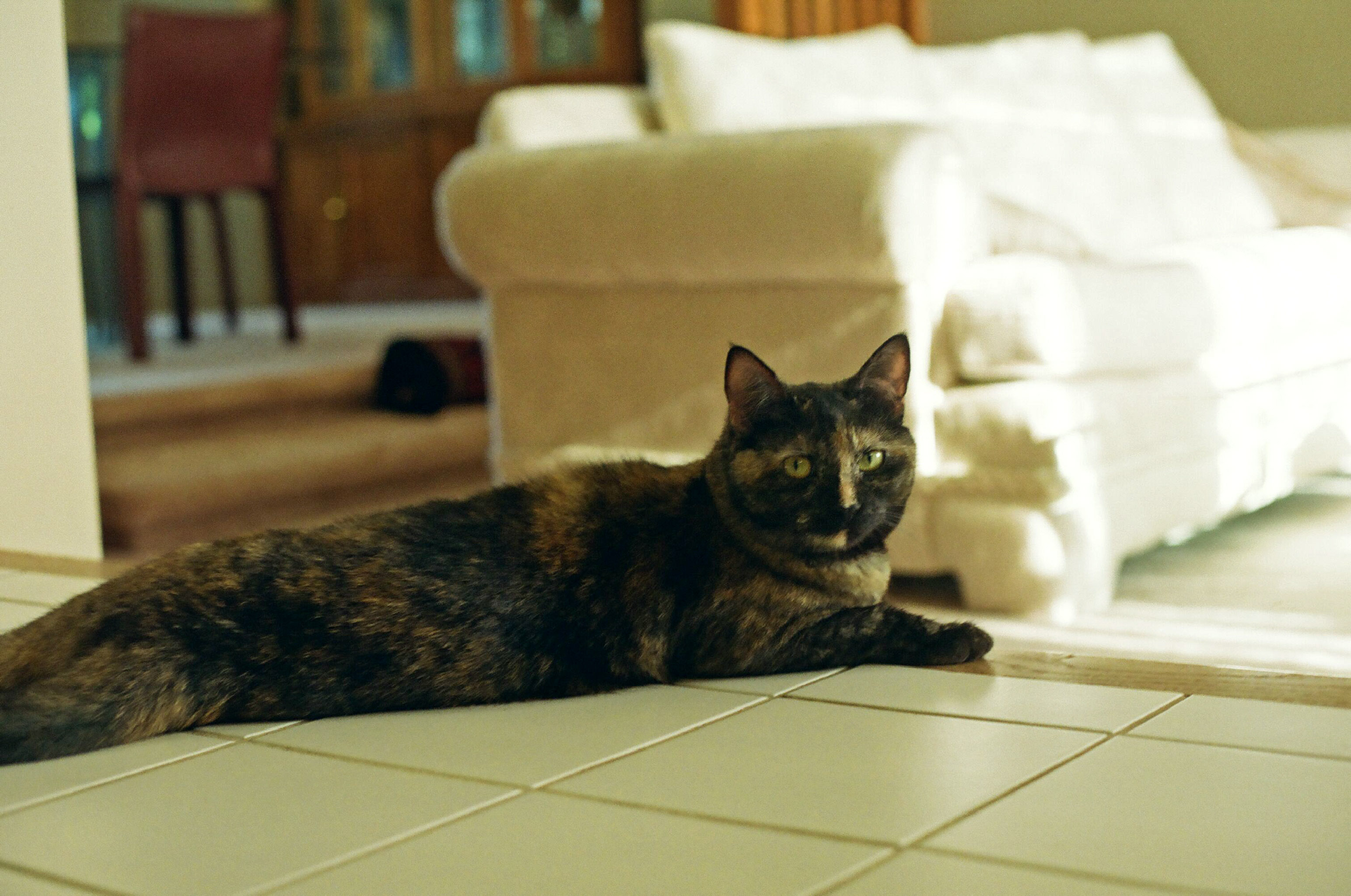 Cat stretched on the floor photo
