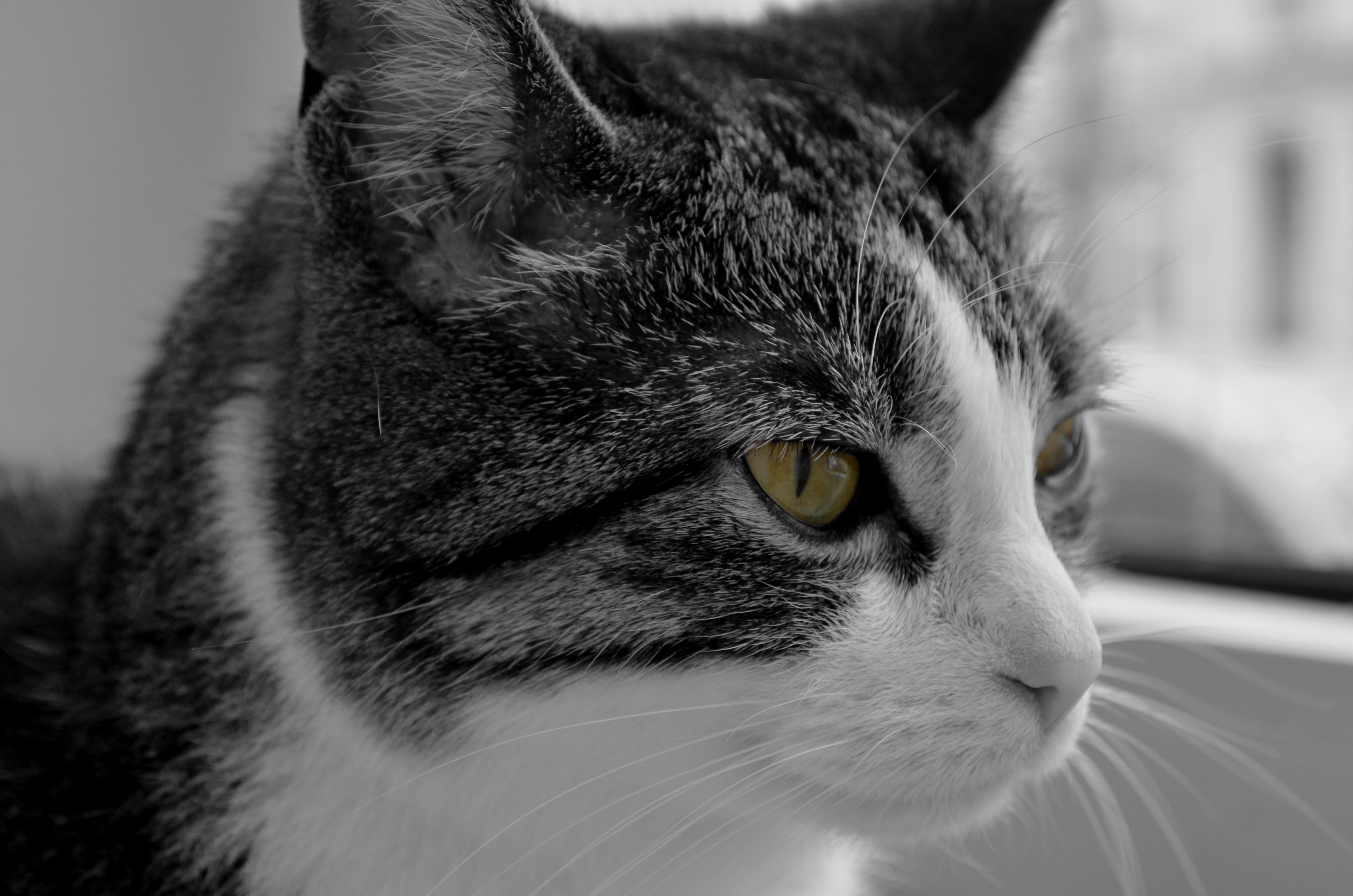 Cat - tasha photo