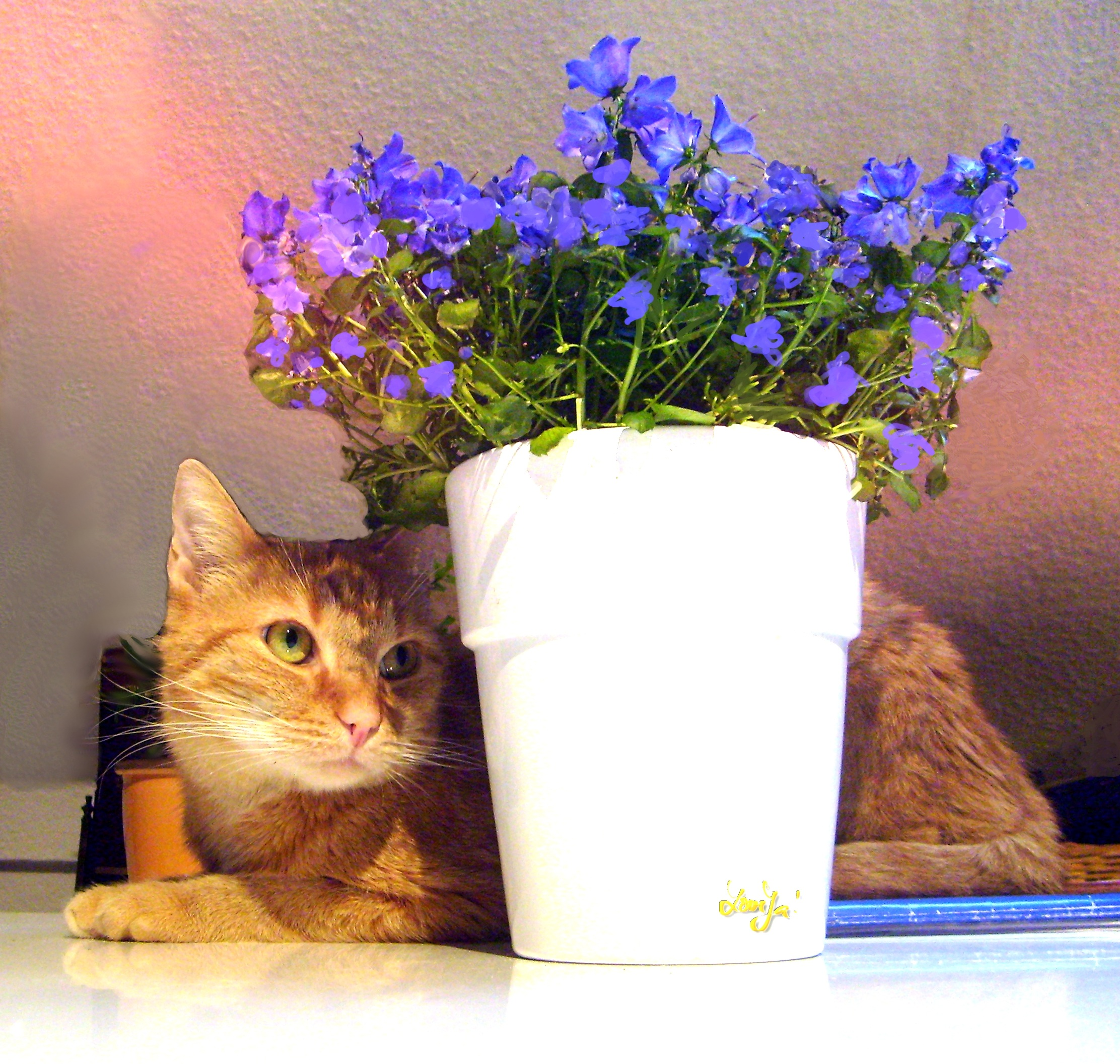 Cat with the pot photo