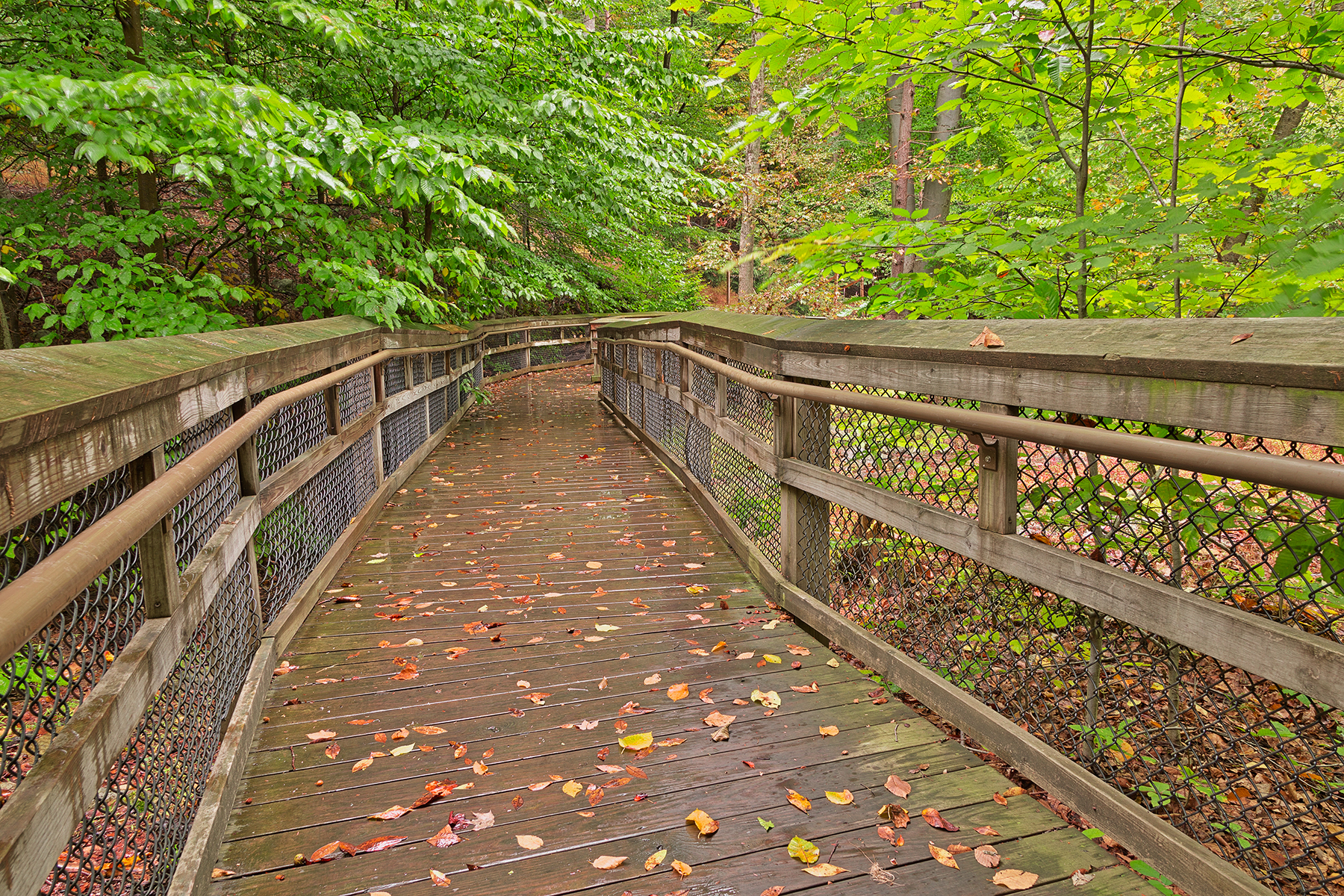 Catoctin Mountain Boardwalk - HDR, America, Pathway, Scene, Red, HQ Photo