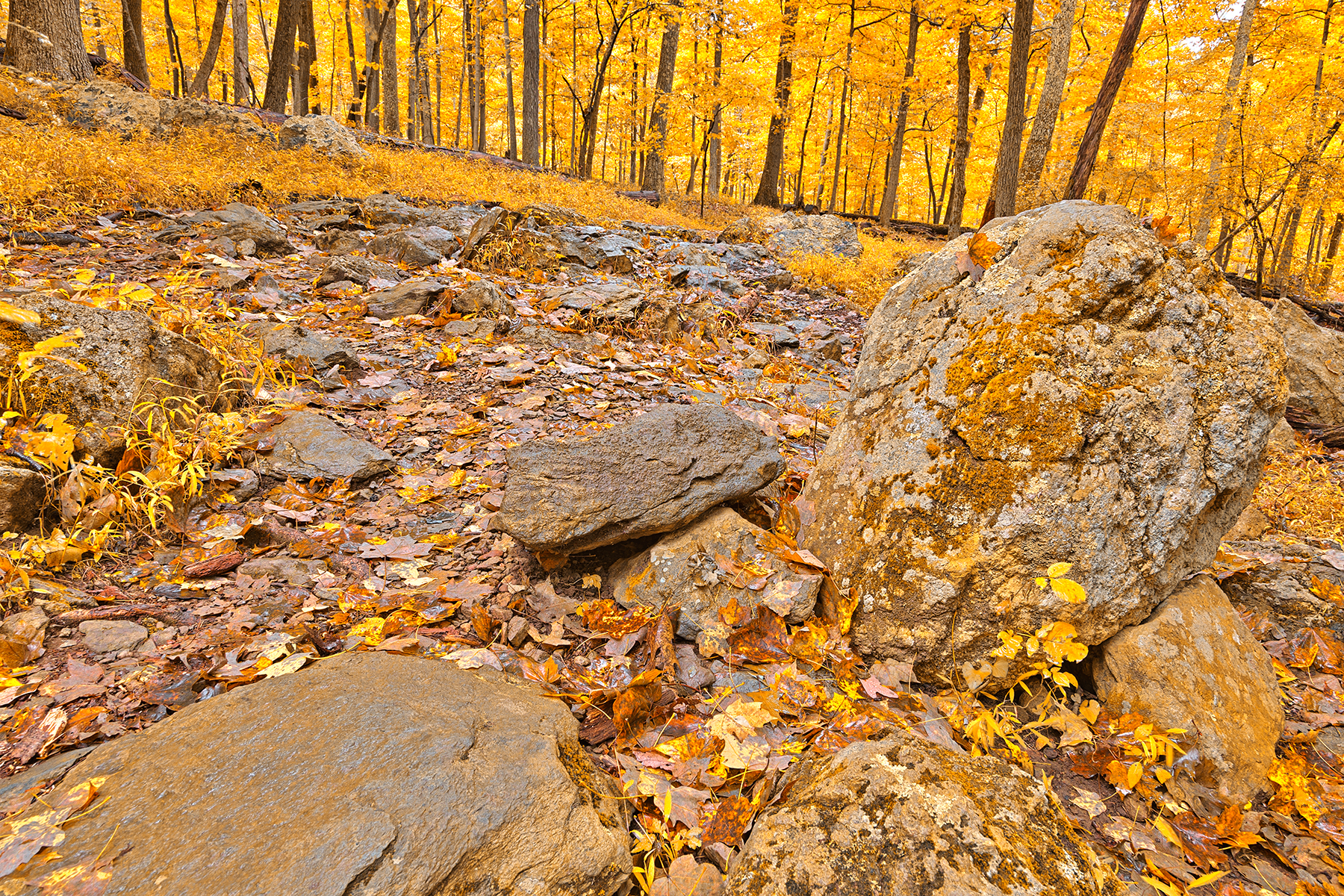 Catoctin Mountain Trail - Gold Fantasy HDR, America, Pathway, Seasonal, Season, HQ Photo