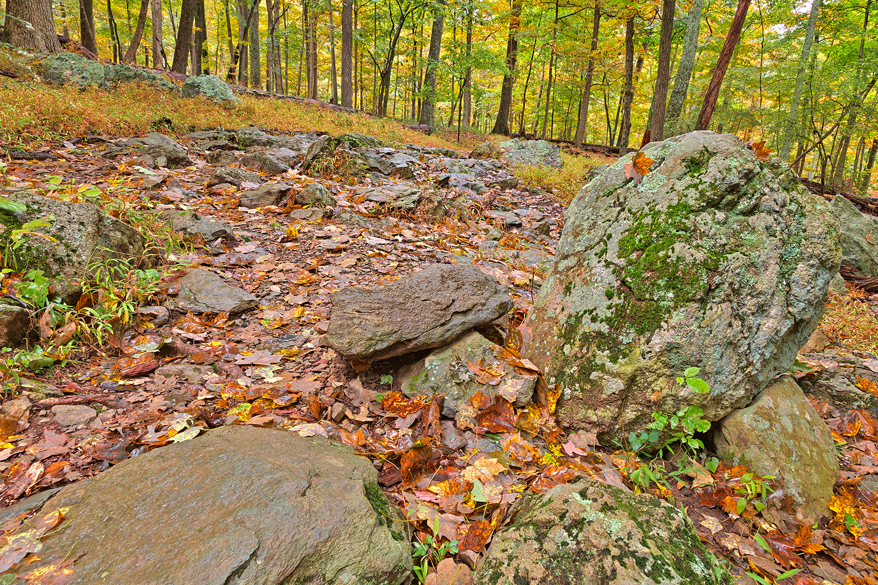 Catoctin mountain trail - hdr photo