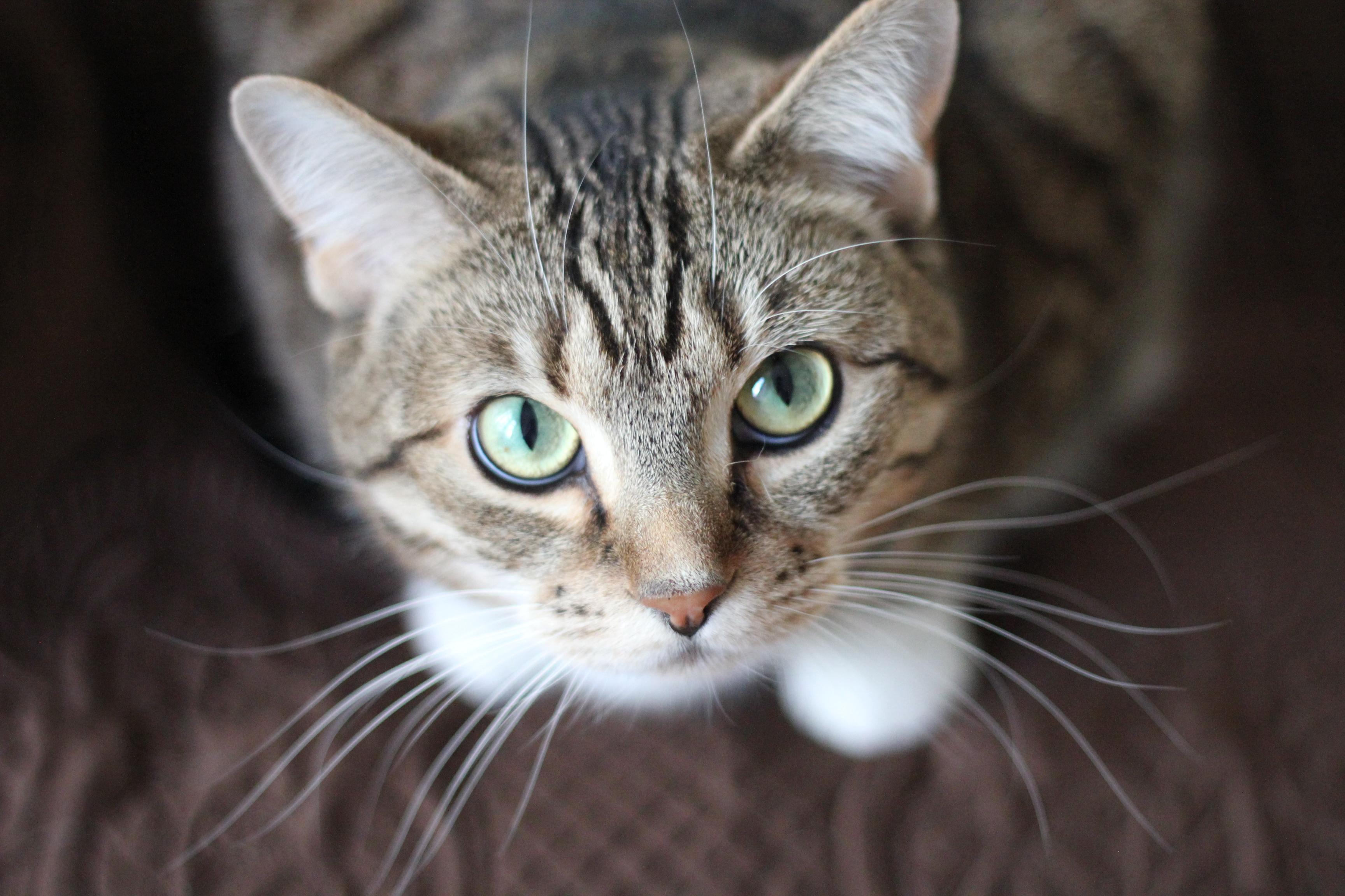 Cat Urination Problems| Cat Behavior Problems