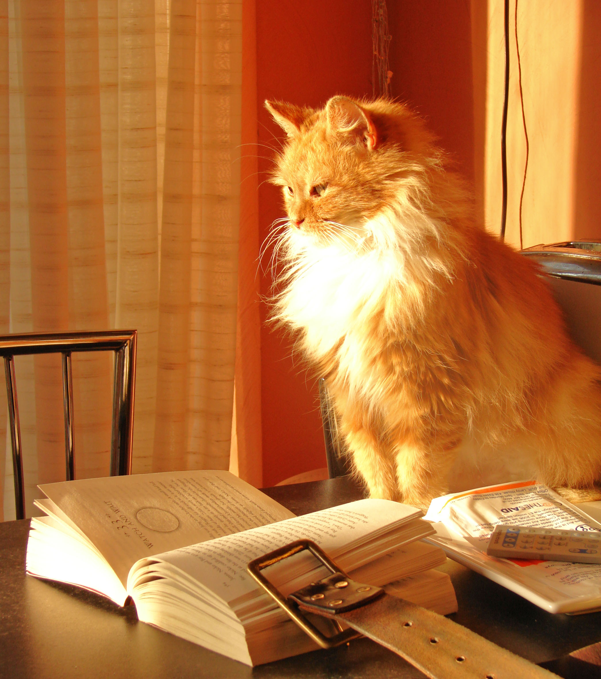 Cats and books photo