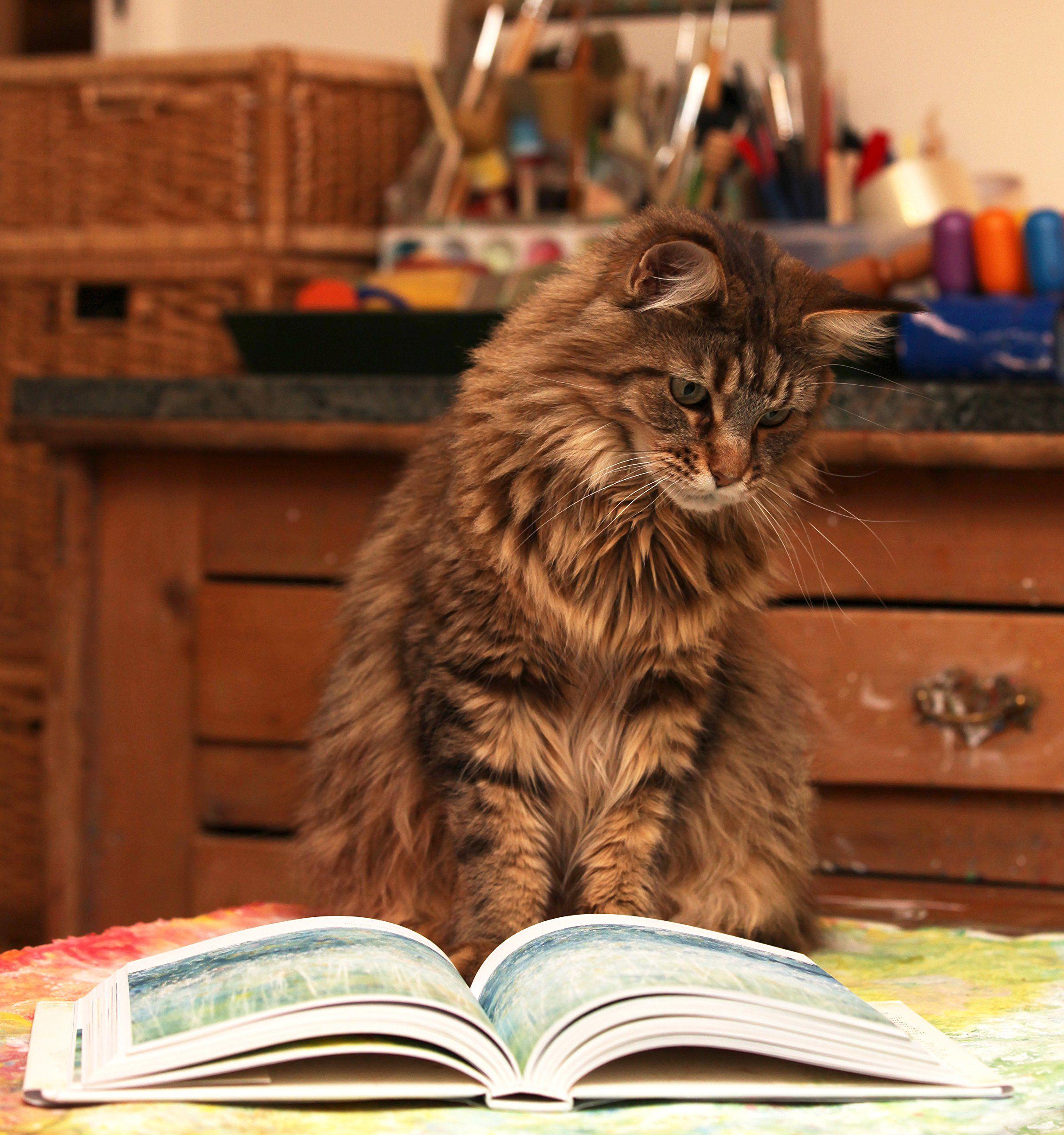Thula reading Iris Grace: Amazon.co.uk: Arabella Carter-Johnson ...