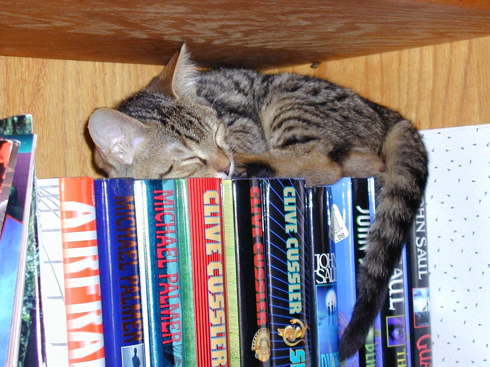Download Cats Books Wallpaper 1600x1200   Wallpoper #427488