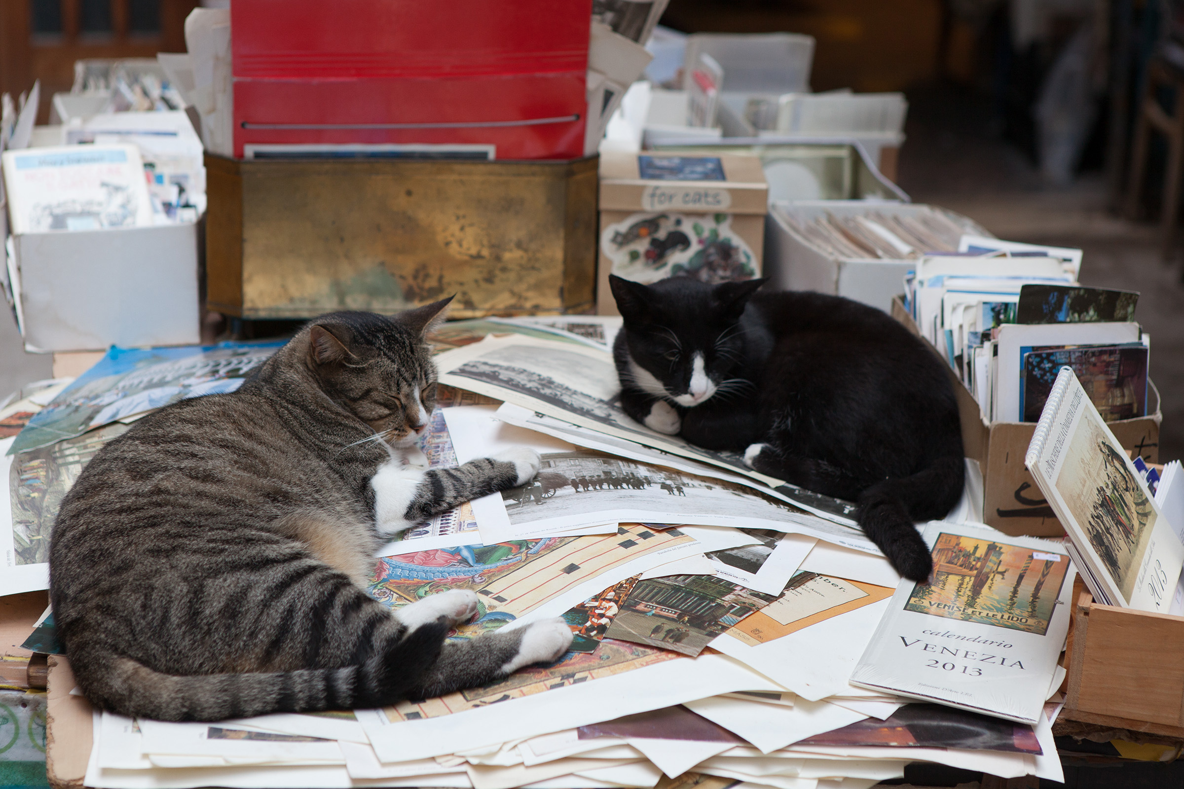 Cats and Books, Animal, Portrait, Library, Literature, HQ Photo