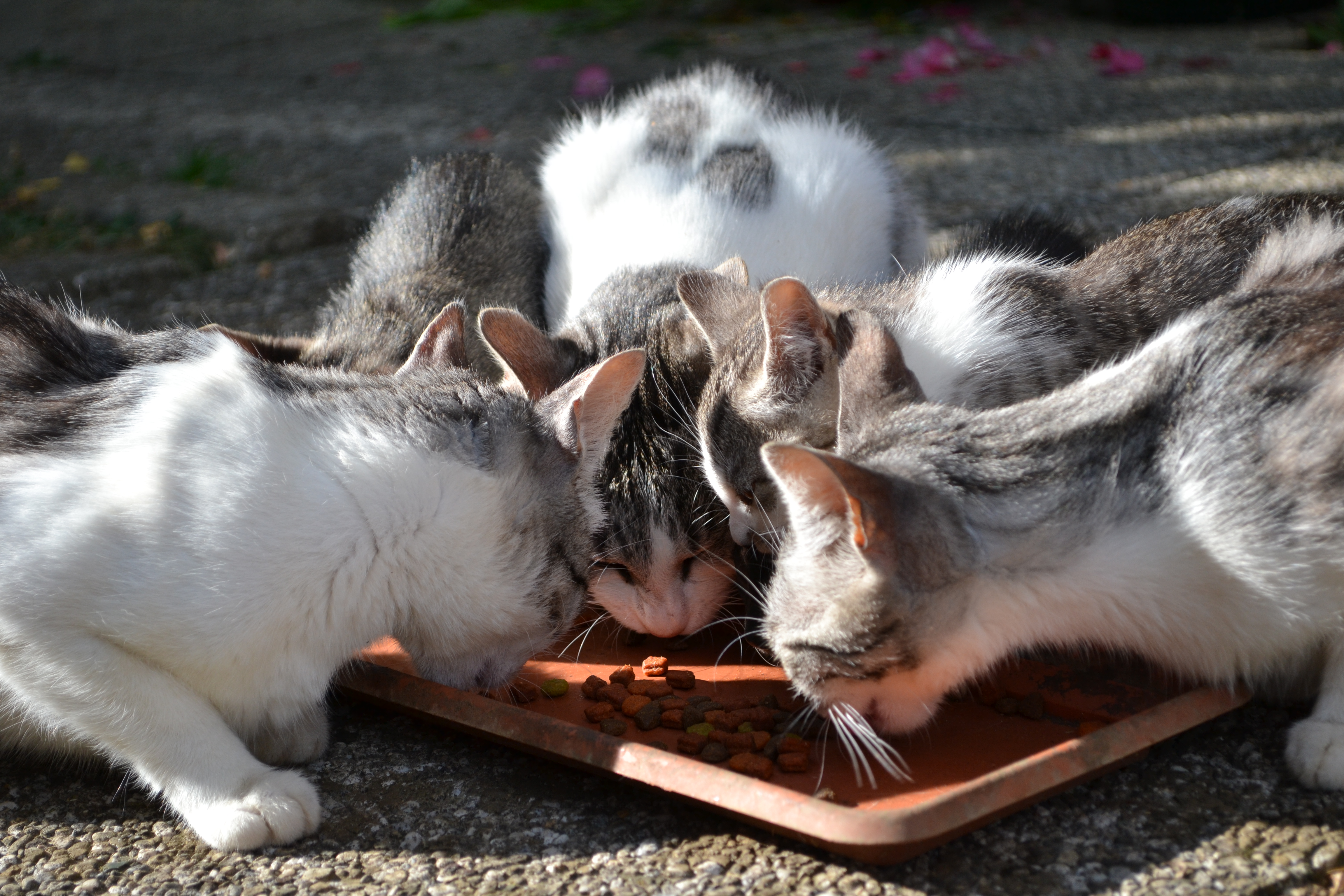 Cats eating photo