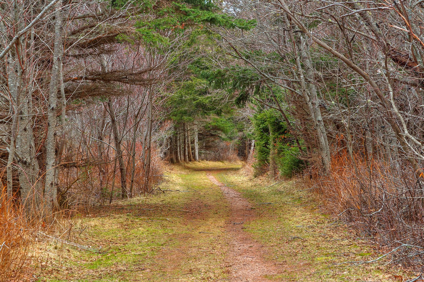 Cavendish Forest Trail - HDR, Passageway, Path, Passage, Pathway, HQ Photo