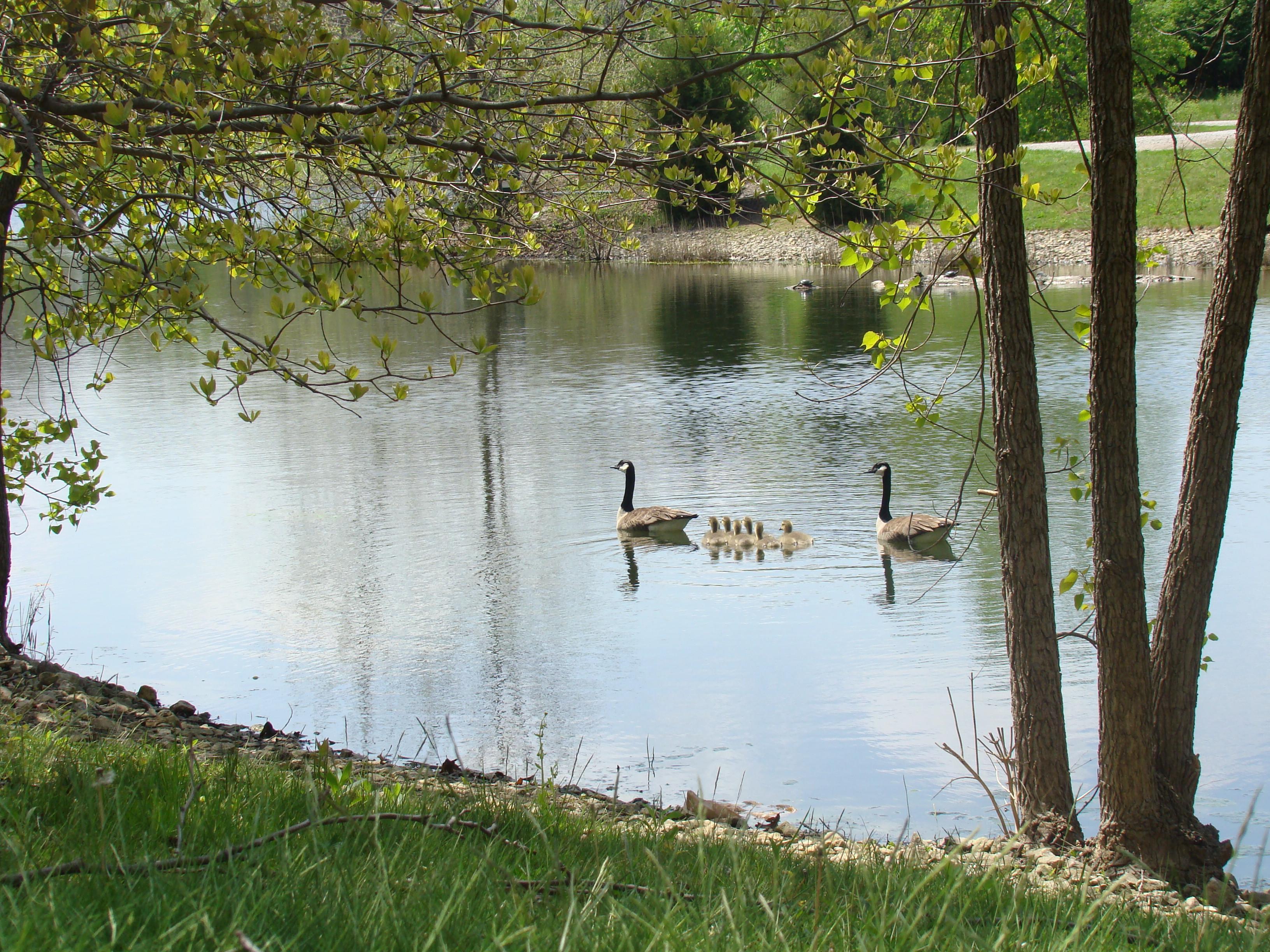 Chadwick Arboretum and Learning Gardens, Arboretum, Ohio State, Water, Tree, HQ Photo