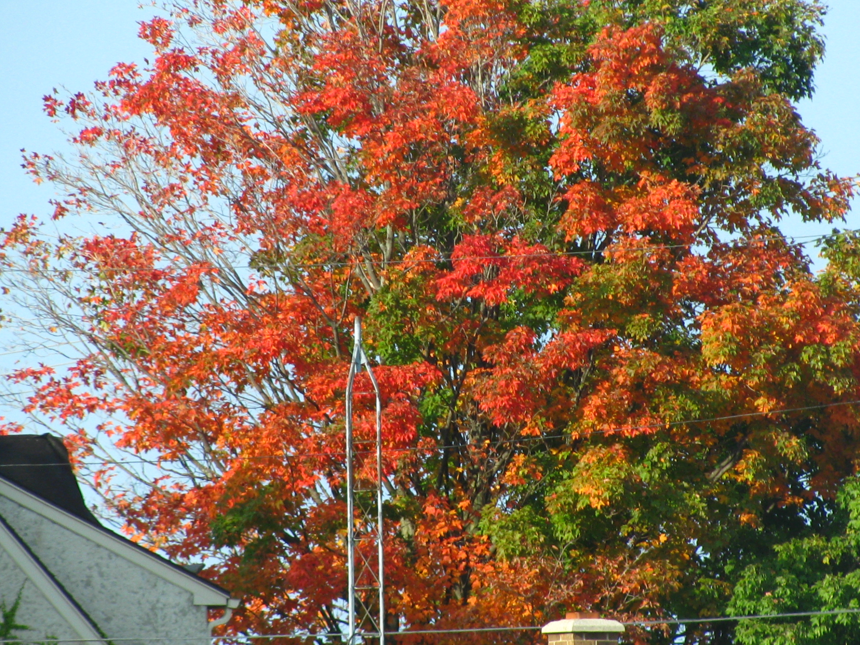 Changing leaves photo