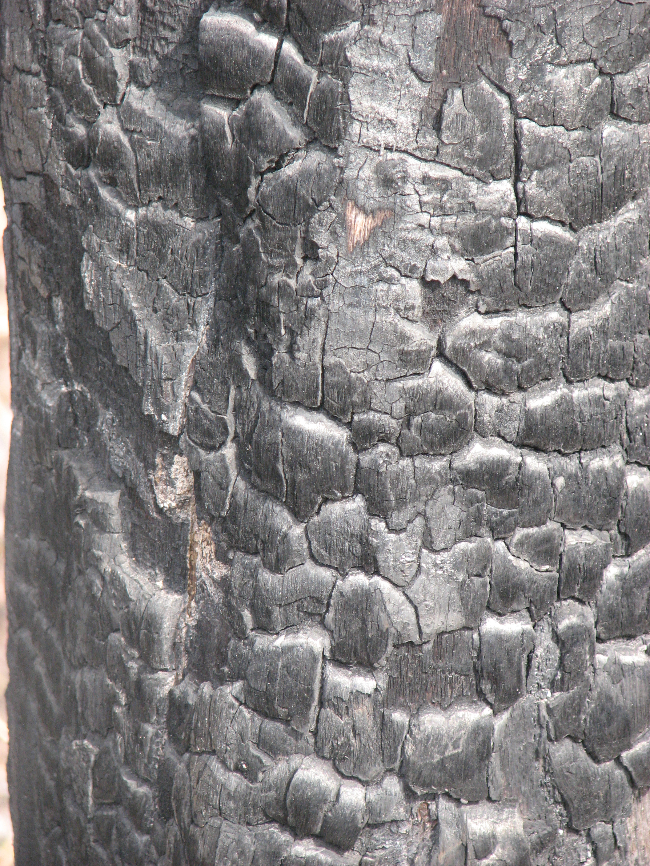 Charcoaled Wood 5 by CharadeTextures on DeviantArt