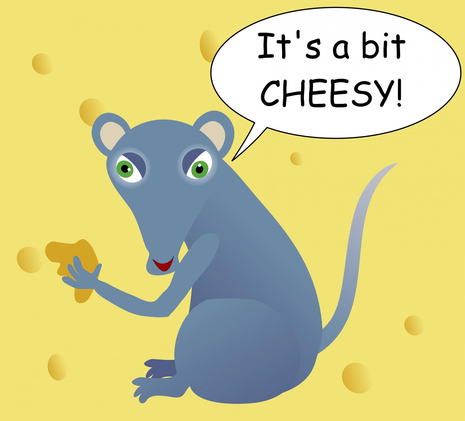 Cheesy mouse photo