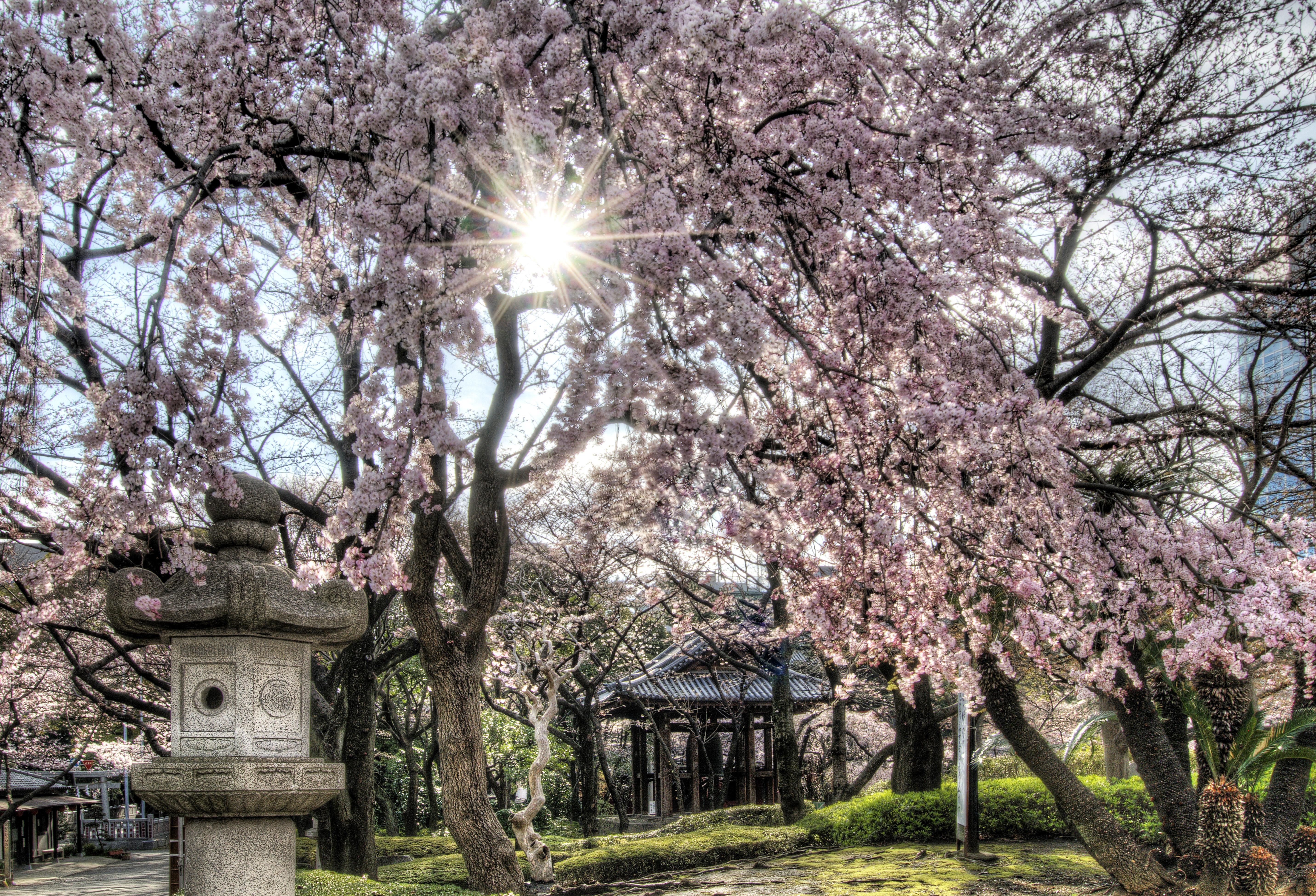 Tokyo, Japan – Cherry Blossoms (HDR) « Places 2 Explore