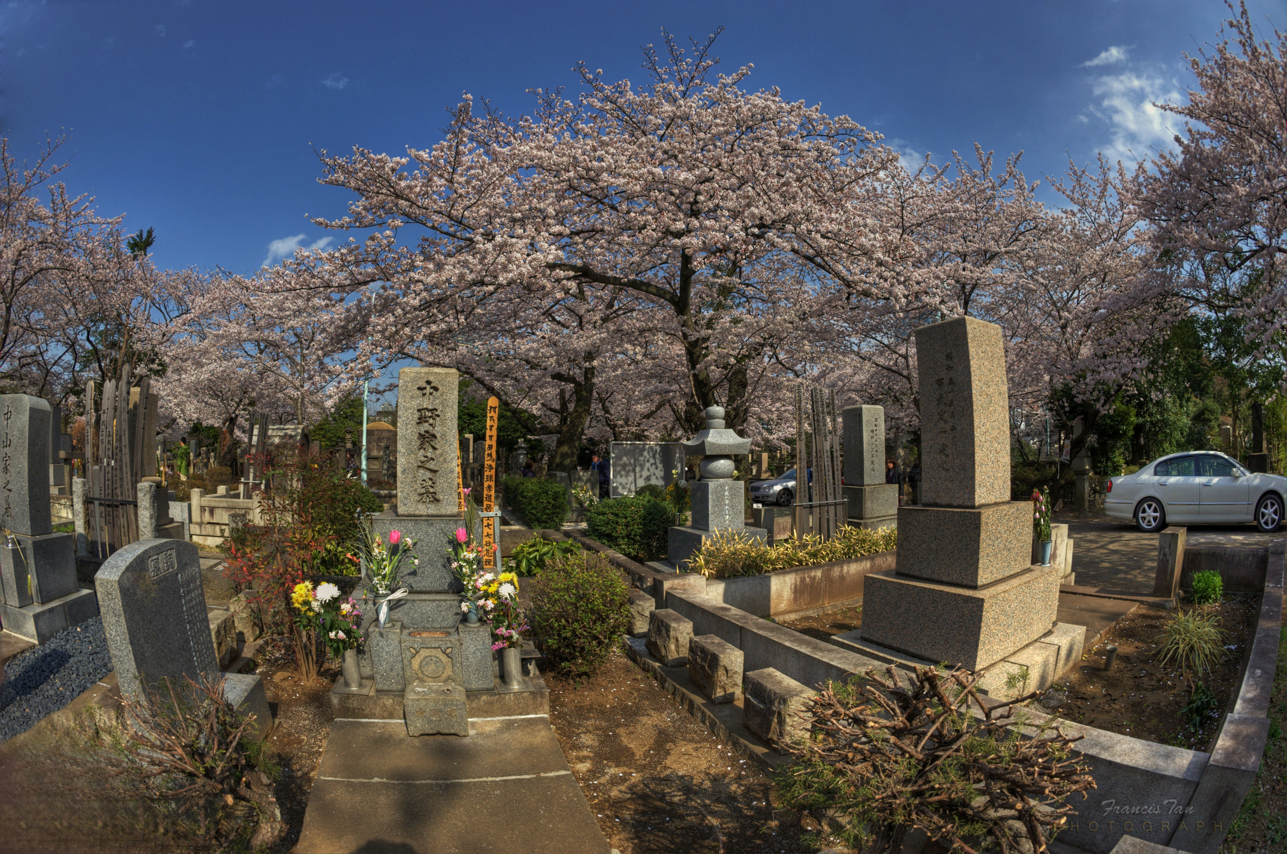 Wallpaper : Japan, landscape, flowers, garden, HDR, cherry blossom ...