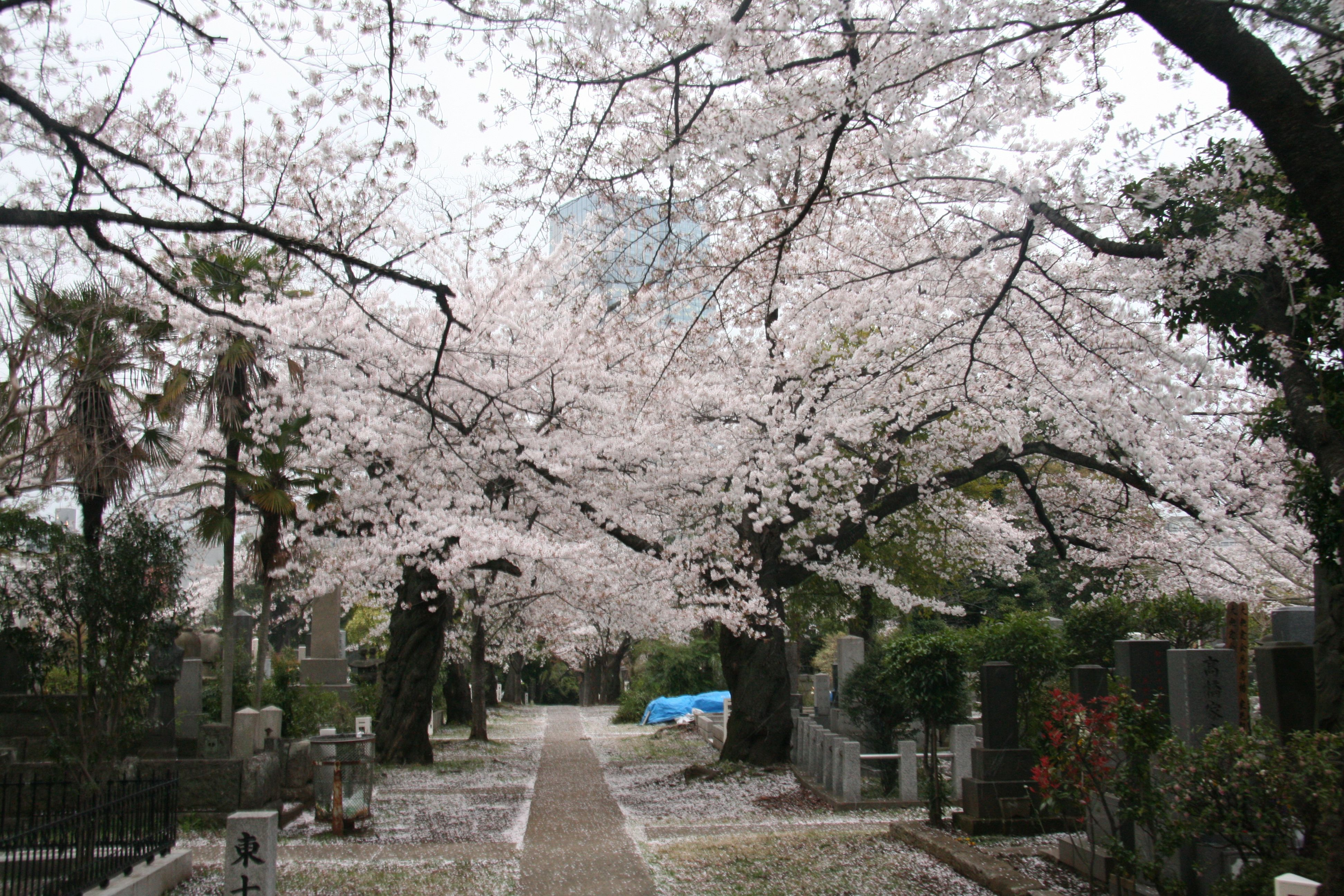 Aoyama Cemetery, Tokyo | From my eyelettes | Pinterest | Cemetery