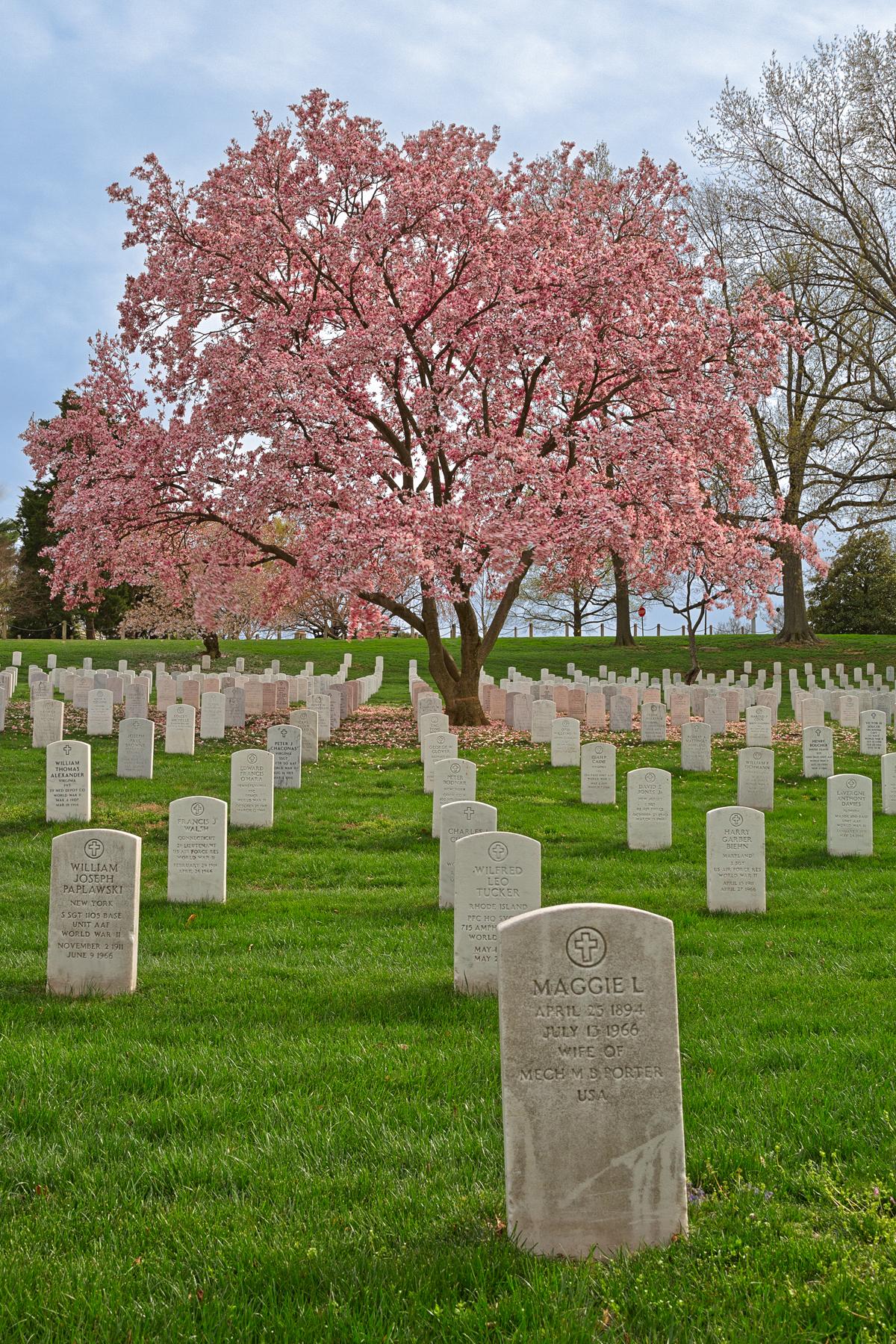 Cherry Blossom Cemetery - HDR, America, Pretty, Scenery, Scene, HQ Photo