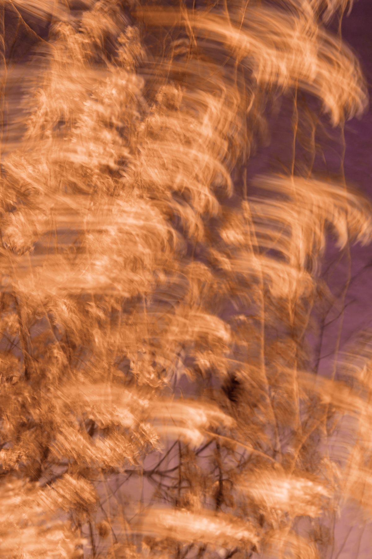Cherry blossom wind streaks photo