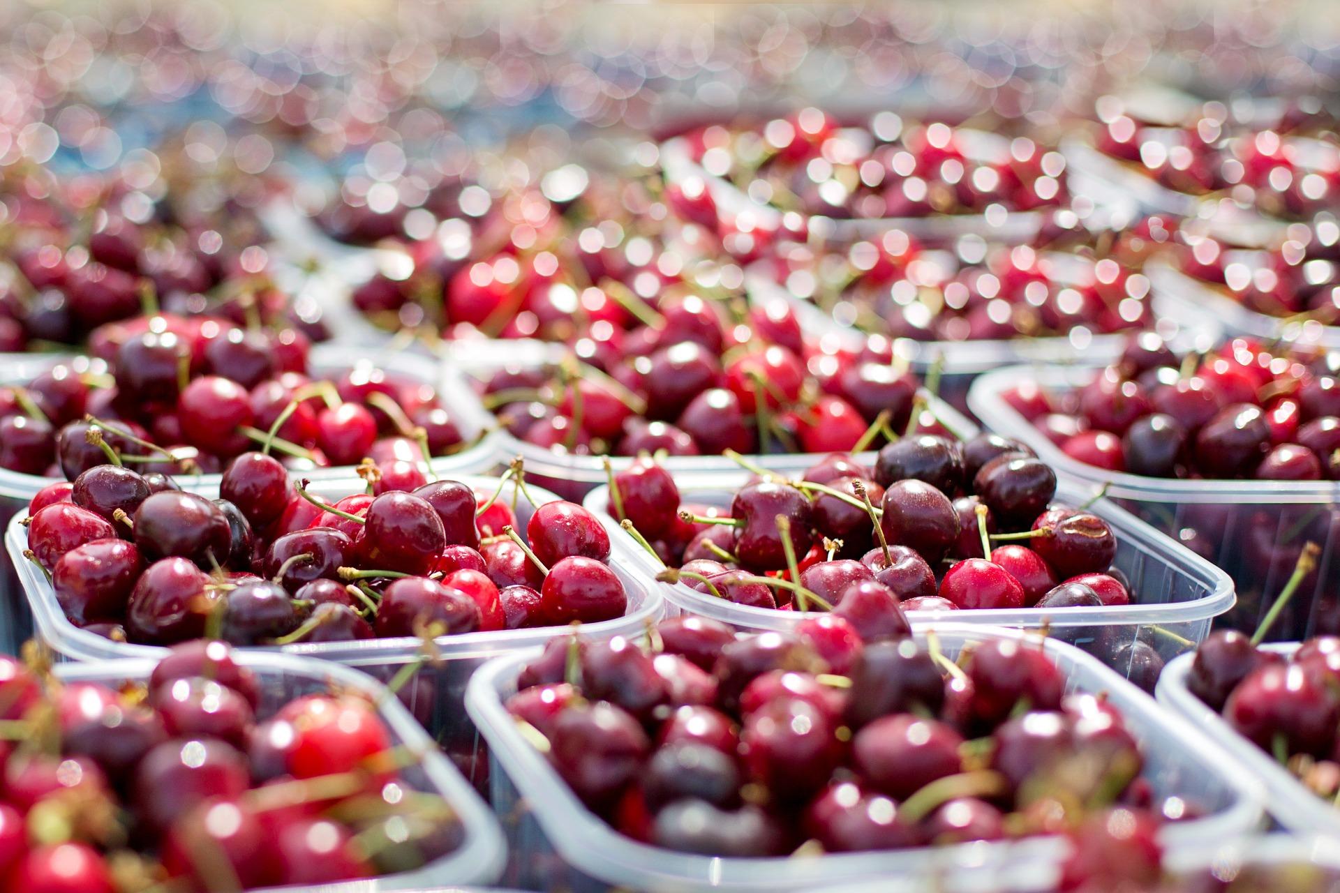 Cherry packing photo