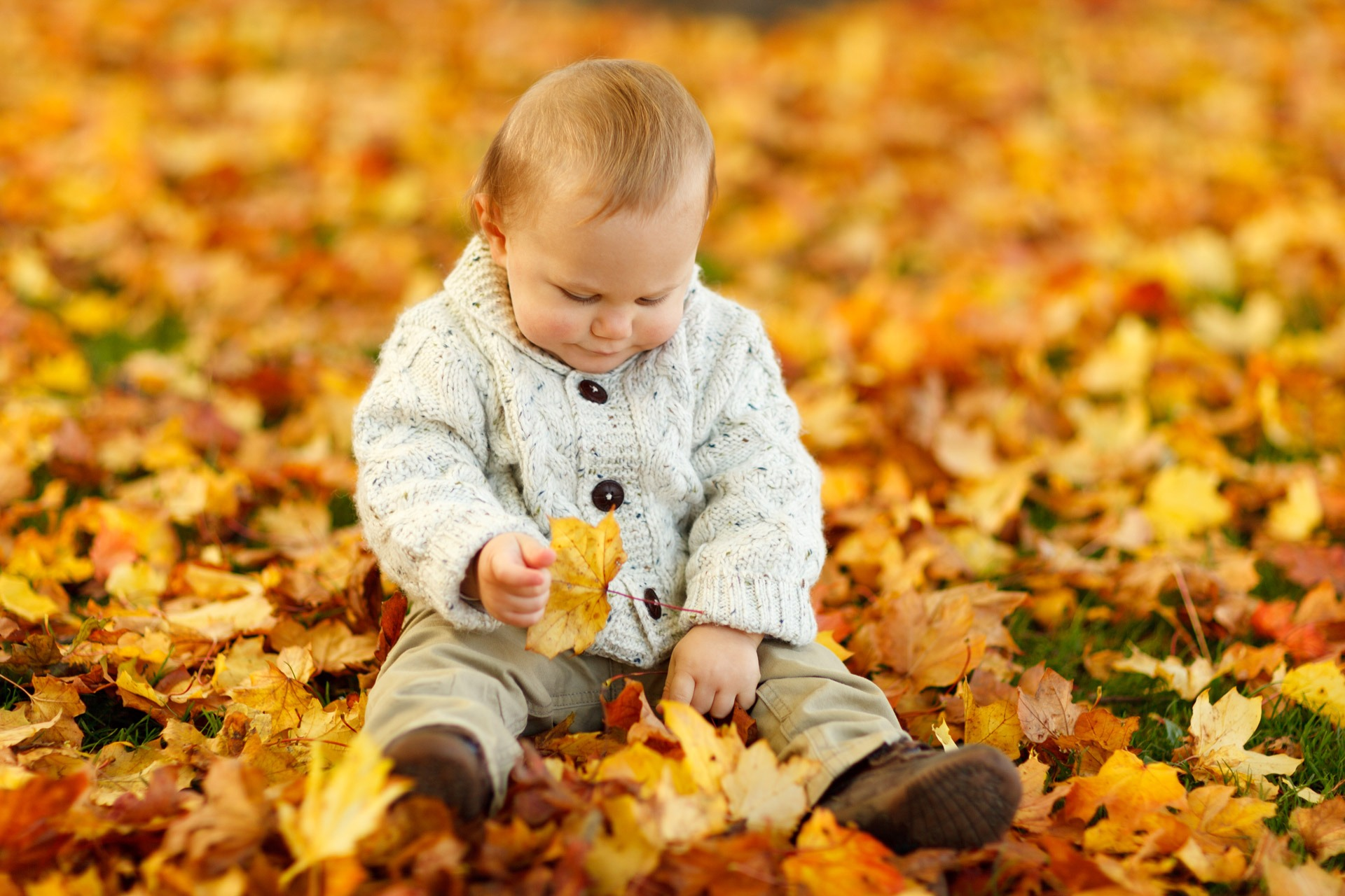 Child In Autumn, Adorable, Autumn, Child, Cute, HQ Photo