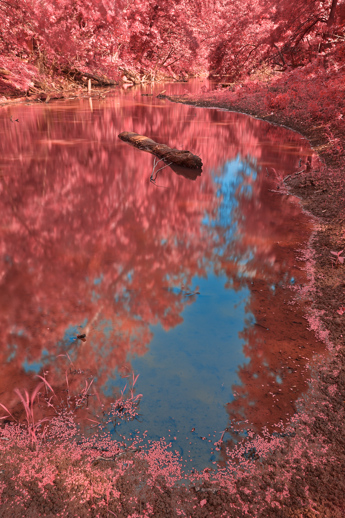 Chisel branch creek - tickle me pink hdr photo