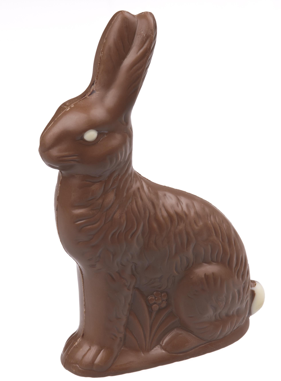 Choco bunny photo