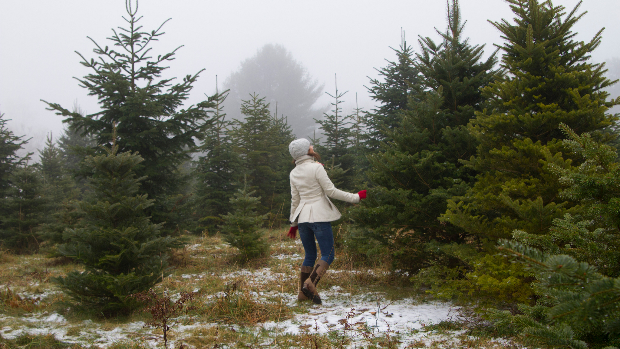 Five Surprising Ways Your Christmas Tree Can Give Back Long After ...