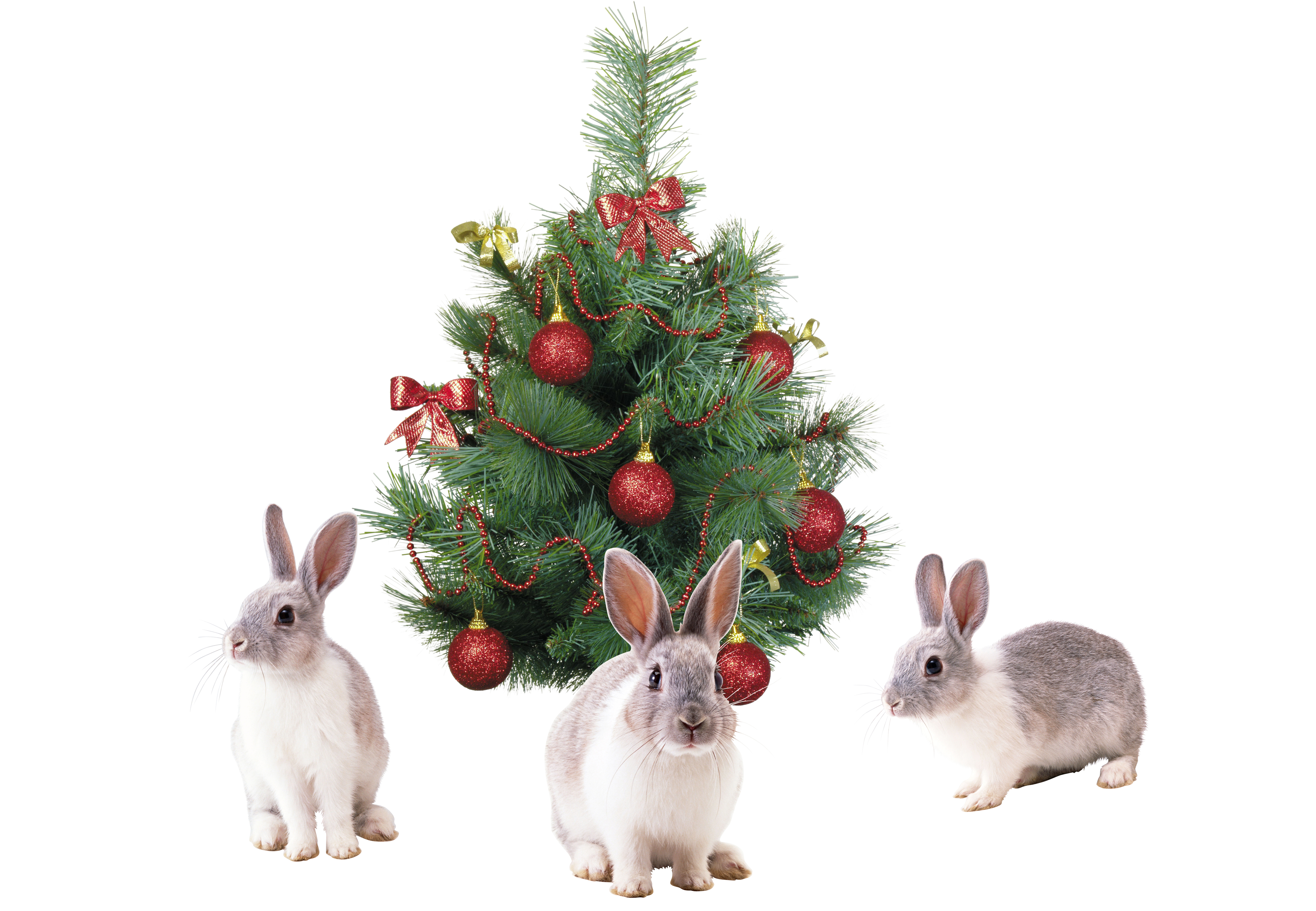 Christmas bunnies photo