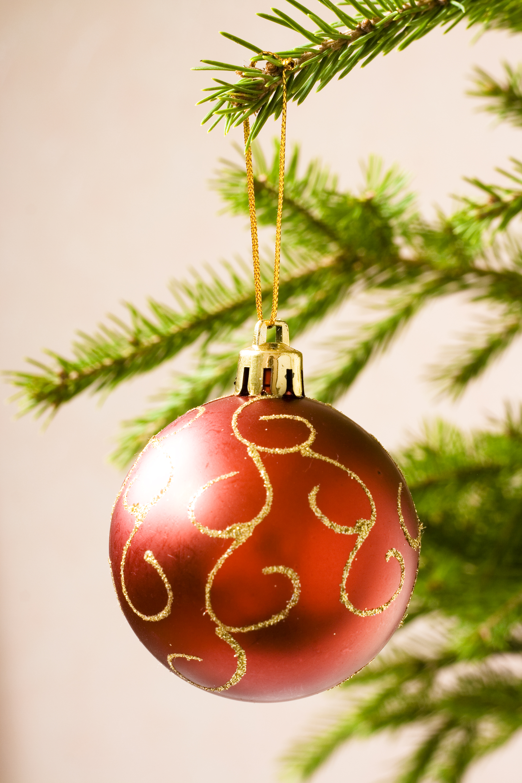 Christmas decoration, Pine, Decor, Ornament, Image, HQ Photo