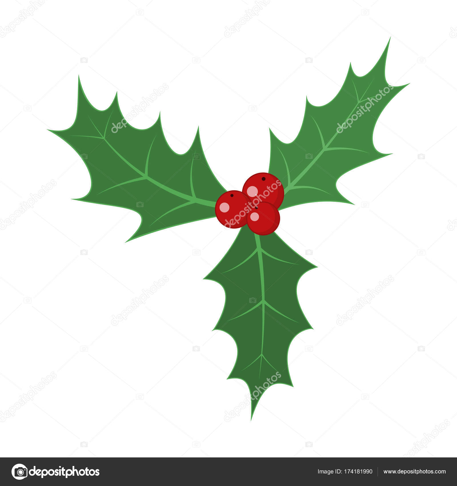 Christmas holly berry leaves. Vector illustration. — Stock Vector ...