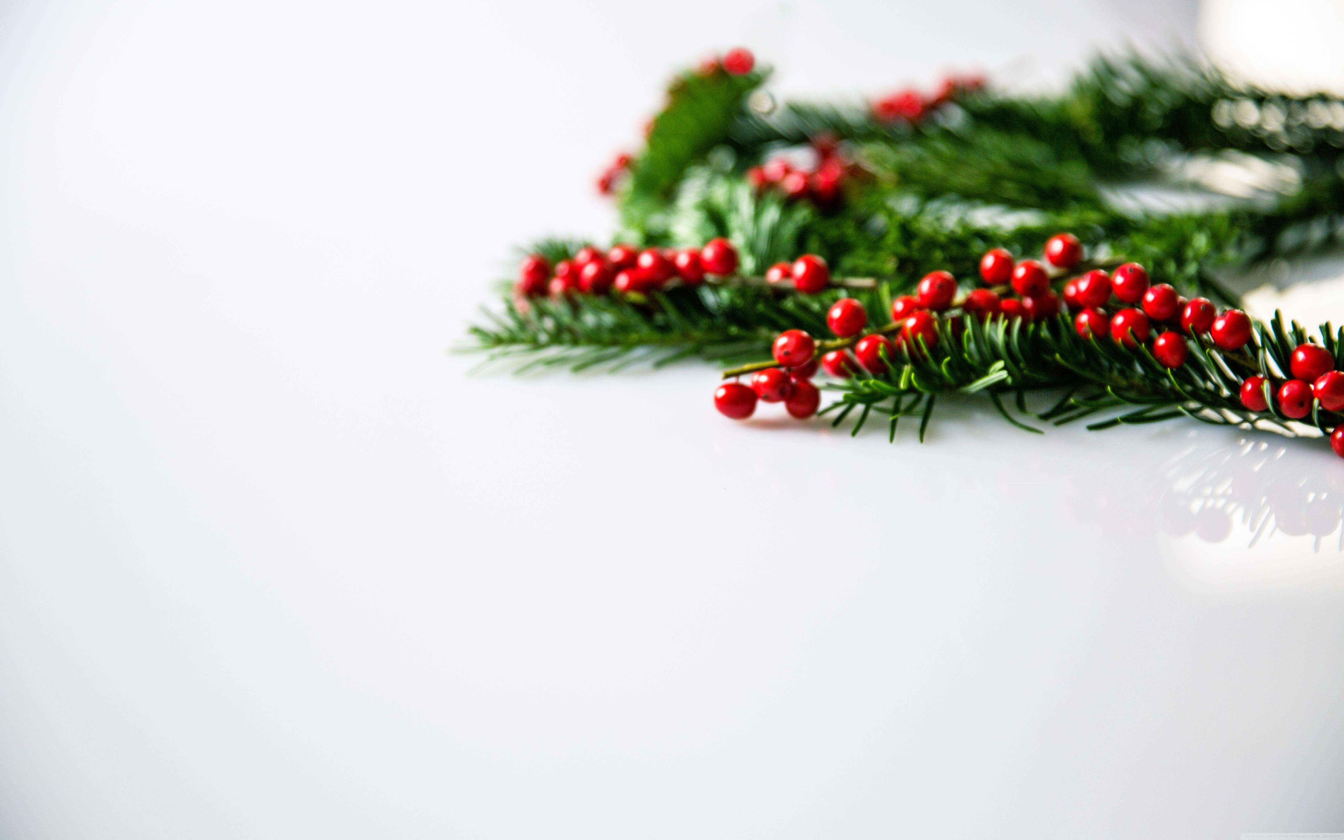 Christmas Holly Berries Background ❤ 4K HD Desktop Wallpaper for 4K ...
