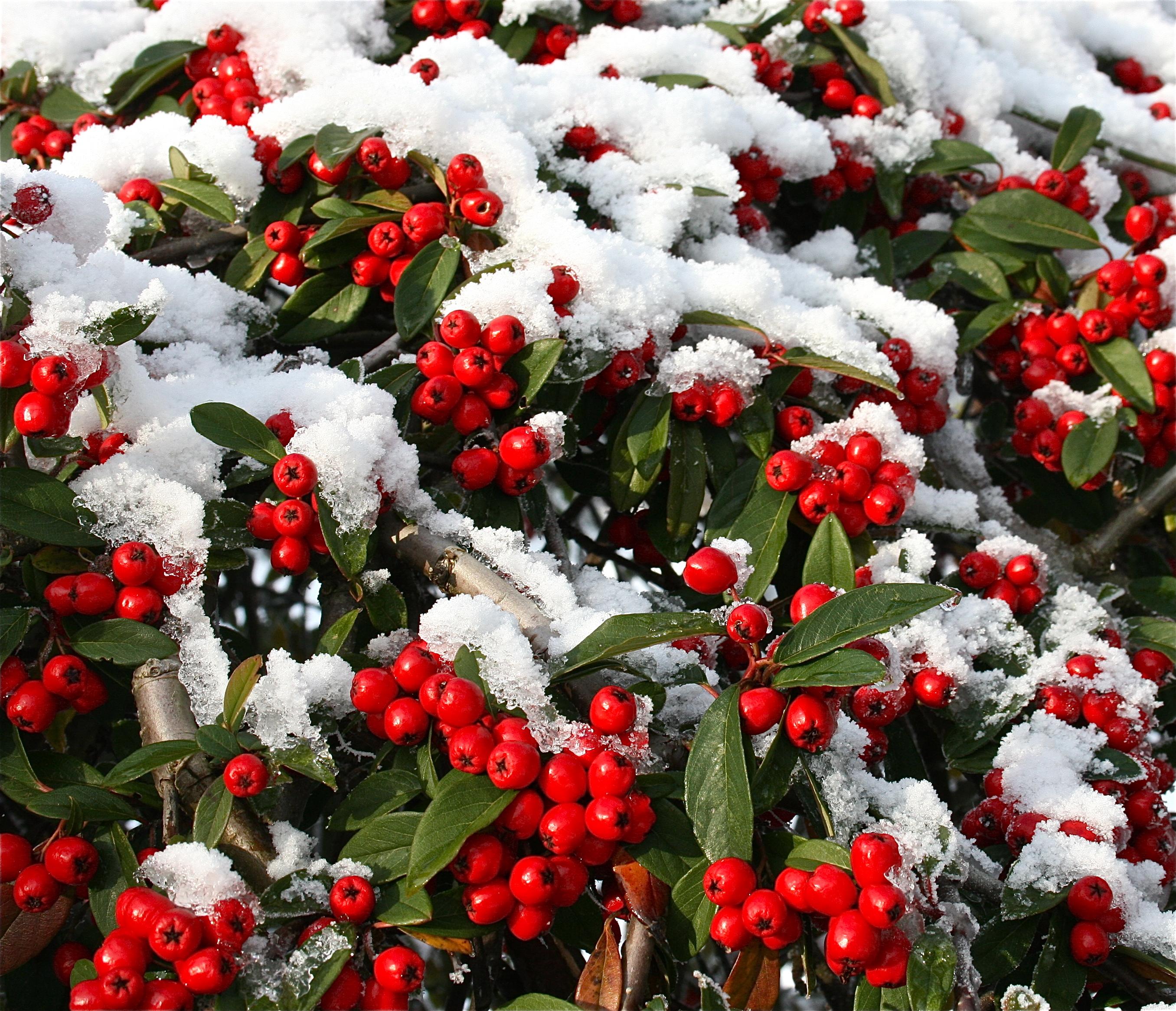 Step by Step on making a Christmas Door Wreath – Lamberdebie's Blog