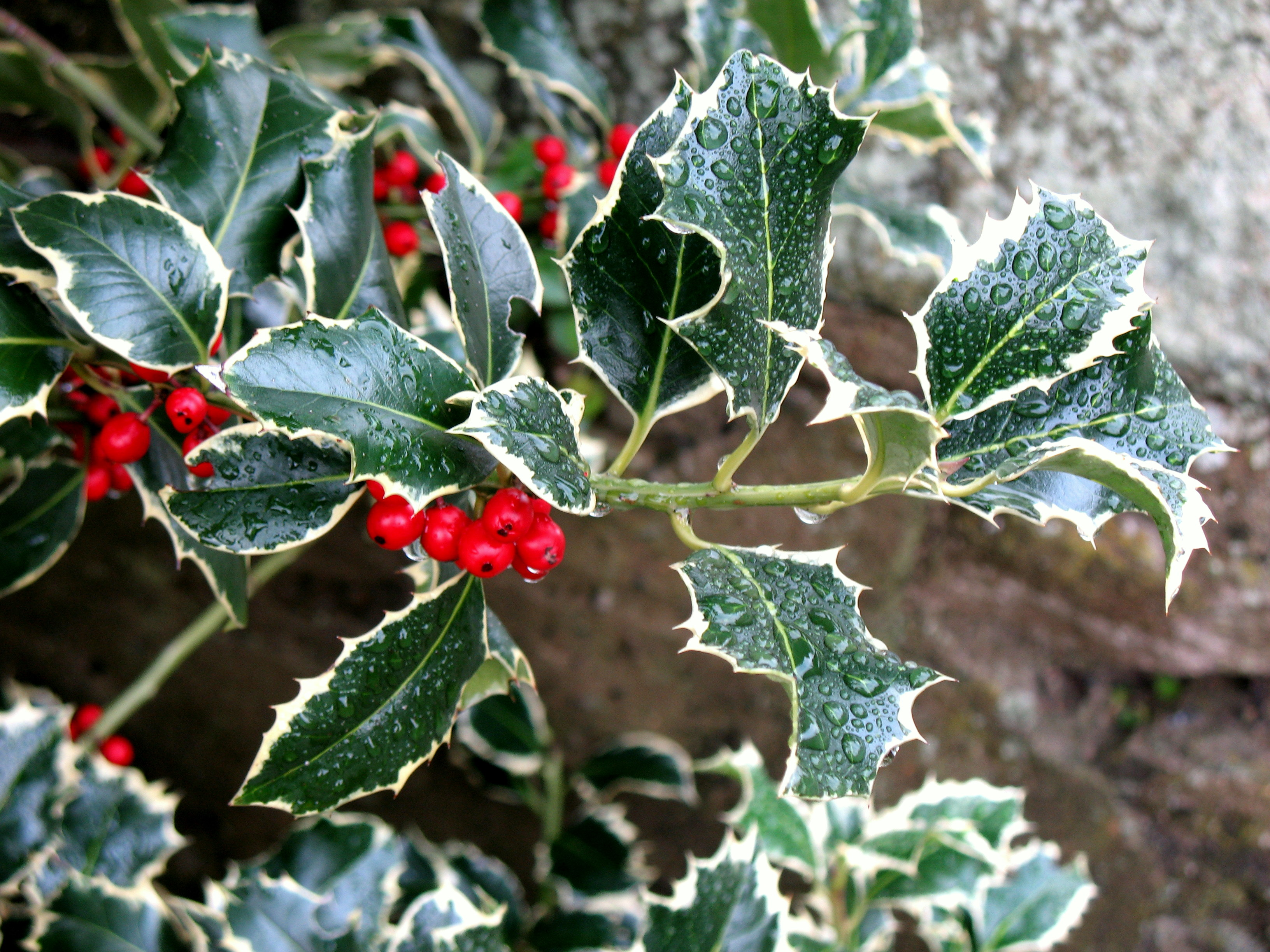 Today in Irish History – 24 December: – Stair na hÉireann/History of ...