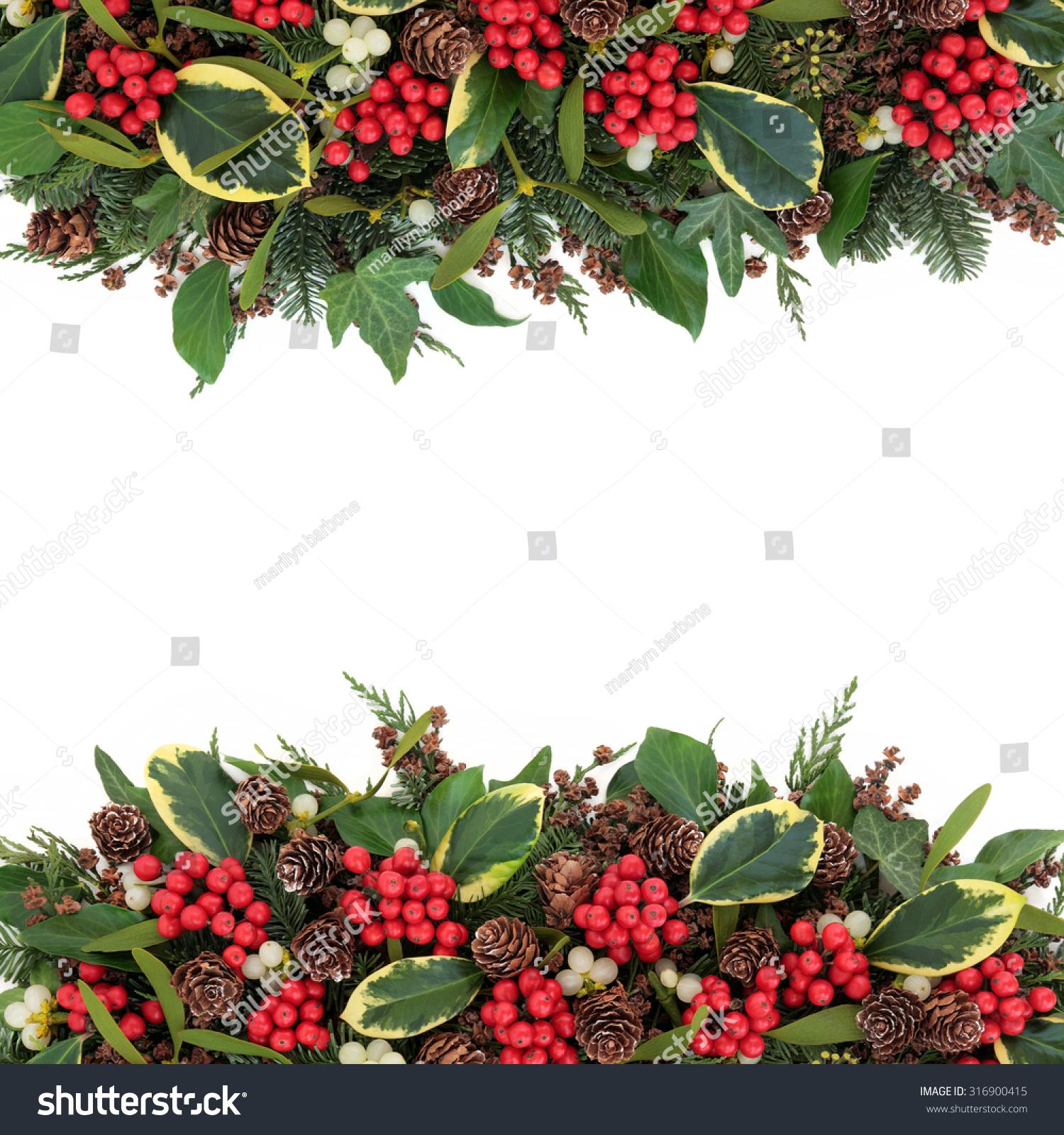 Christmas Winter Background Variegated Holly Mistletoe Stock Photo ...