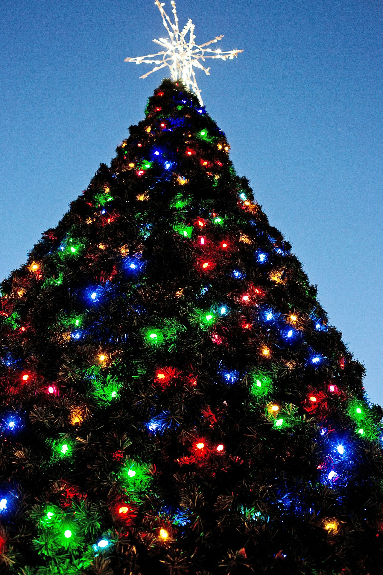 Christmas Tree, Celebrate, Celebration, Christmas, Design, HQ Photo