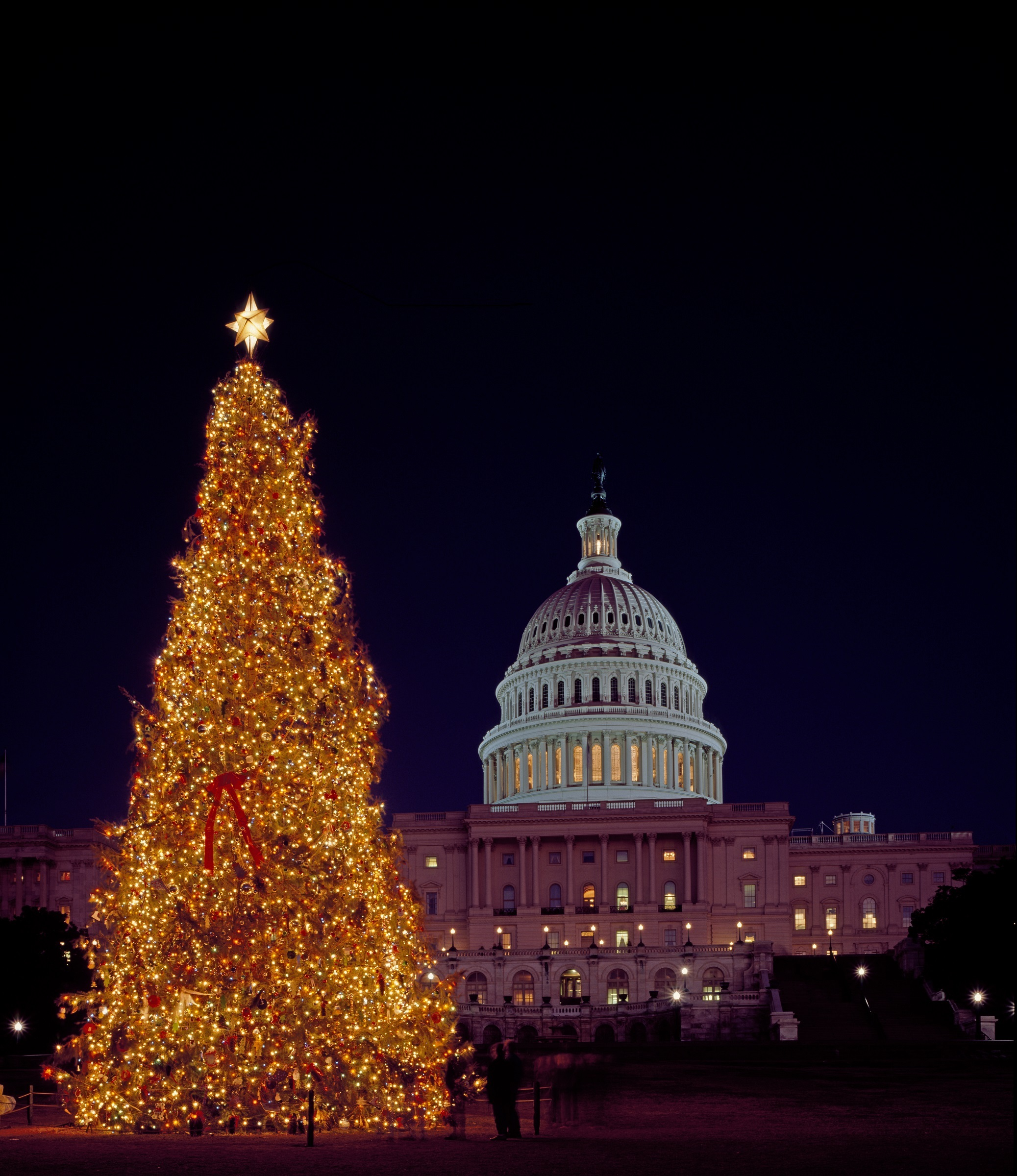Christmas Tree, Building, Capitol, Christmas, Construction, HQ Photo