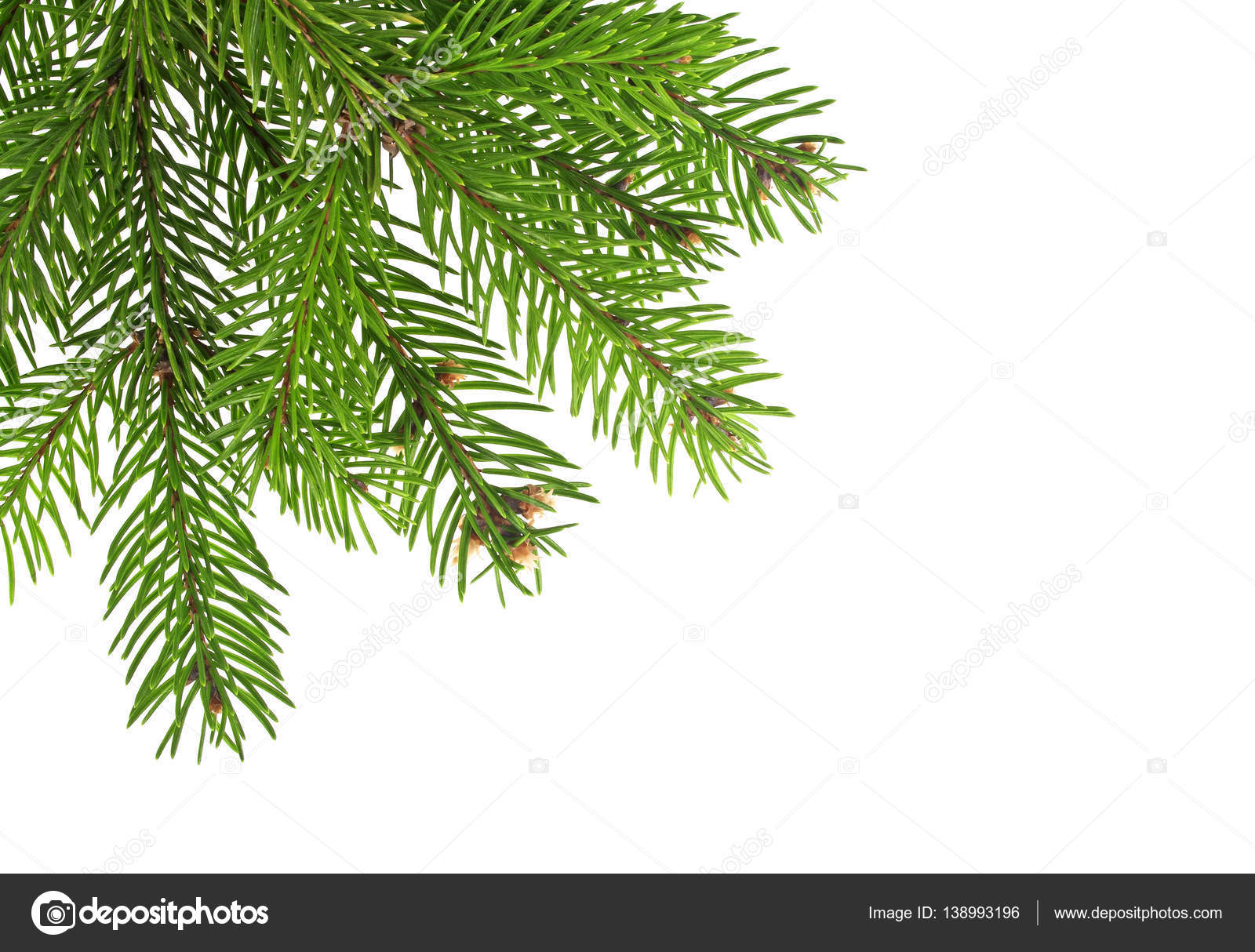 Christmas tree branch photo